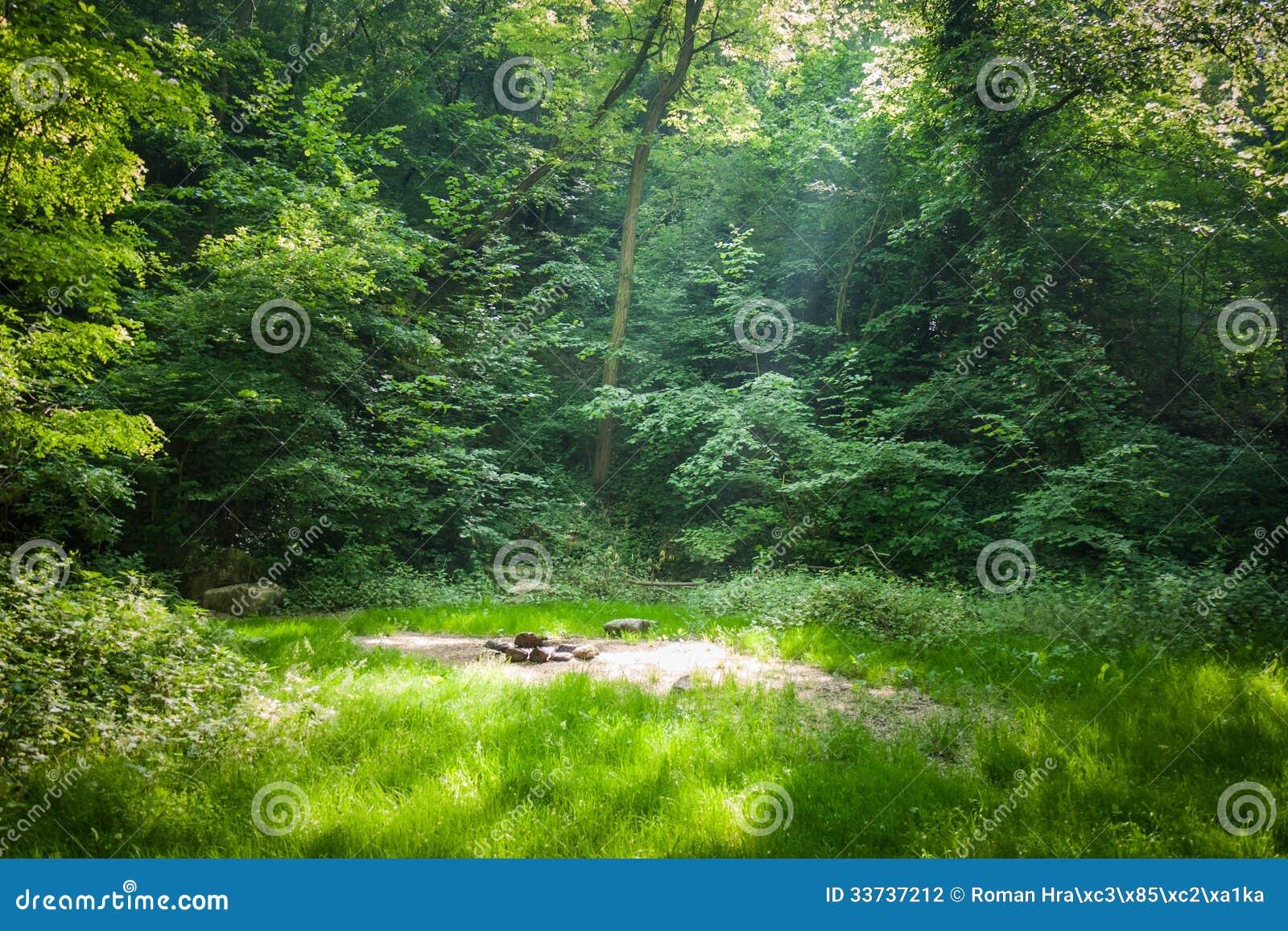 Место леса располагаясь лагерем