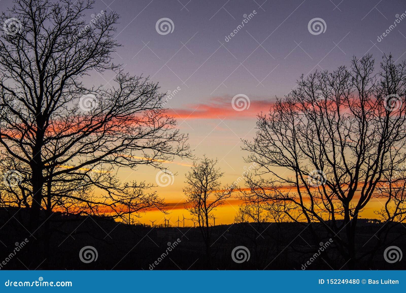 Место захода солнца с некоторыми одиночными деревьями