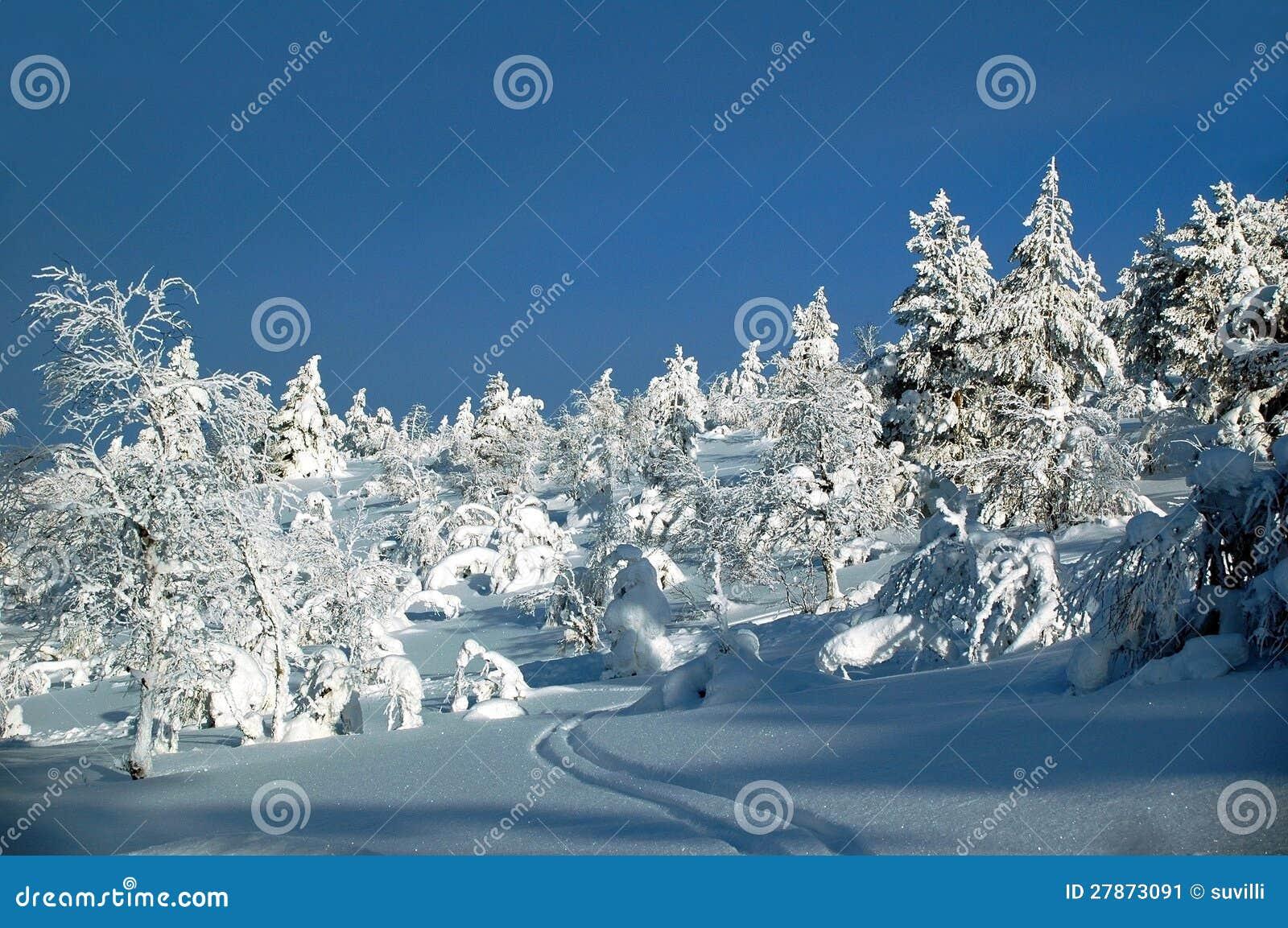 Место зимы с следом катания на лыжах