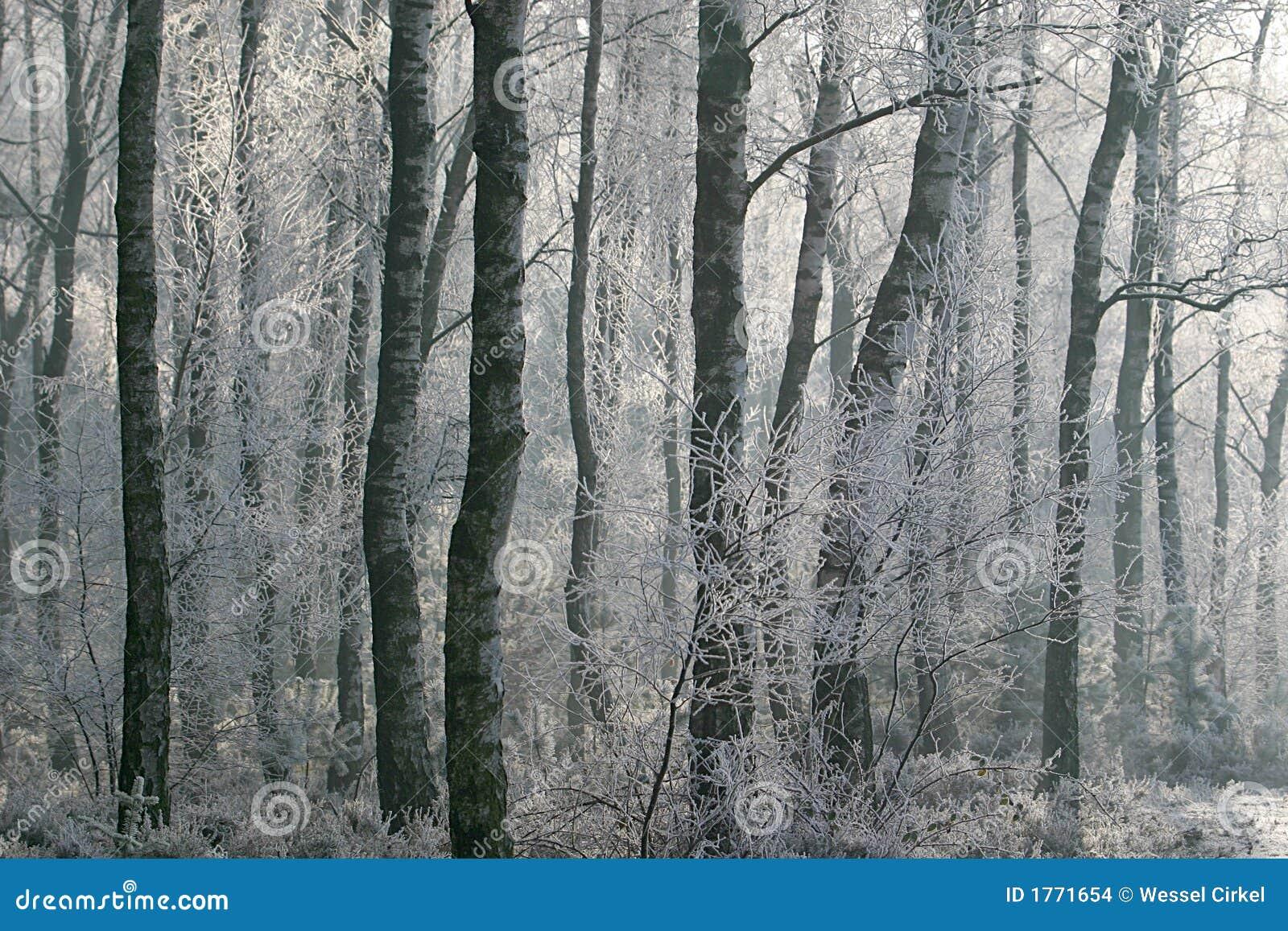 место hoarfrost пущи зимнее