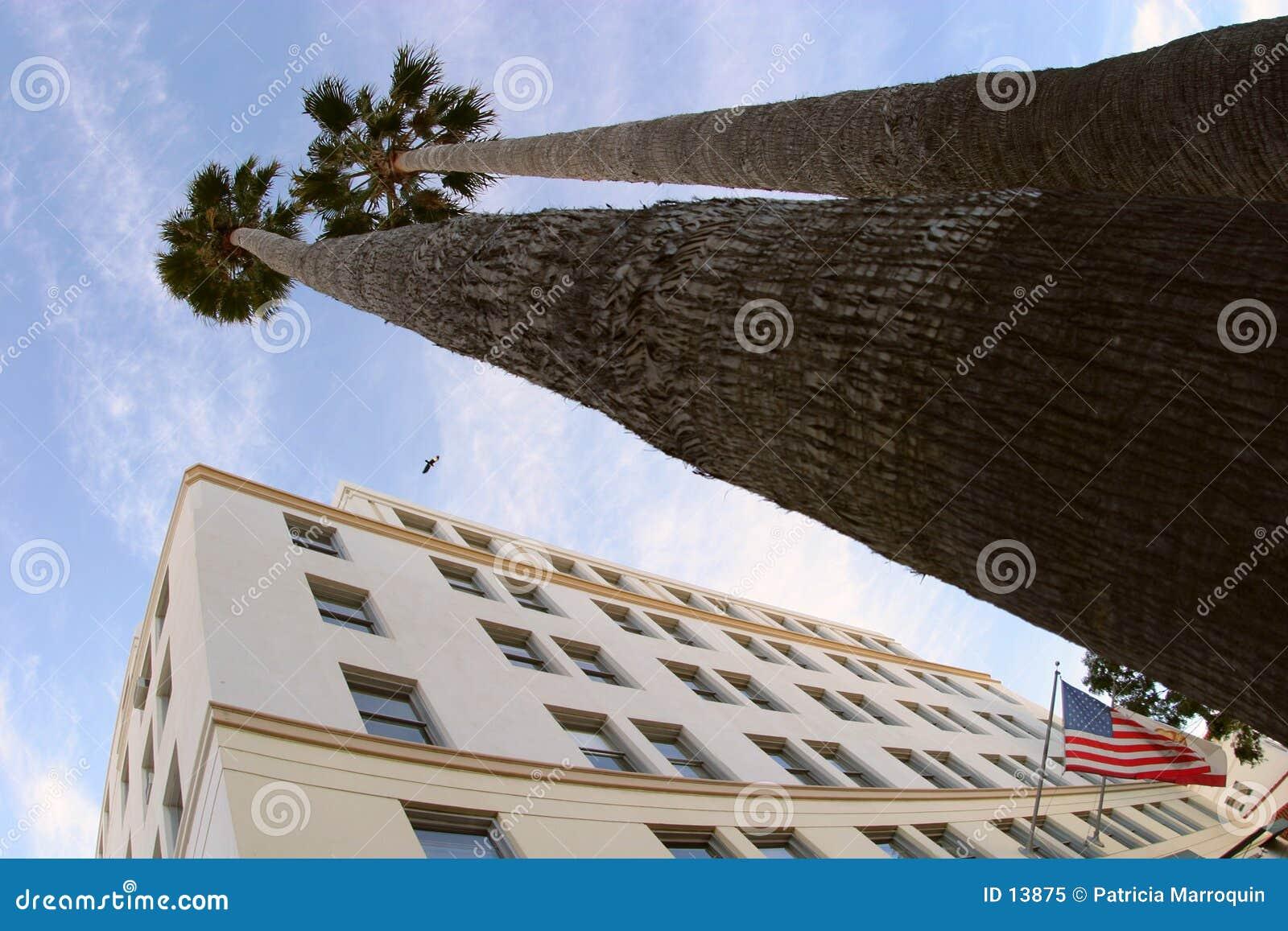 мечтать california