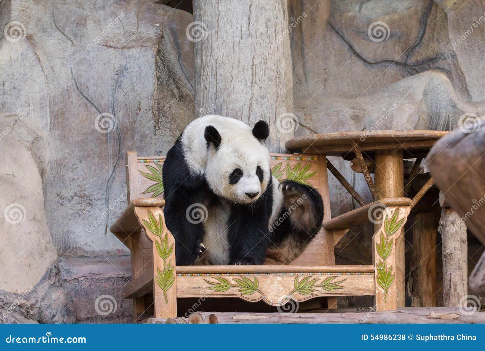 Медведь гигантской панды