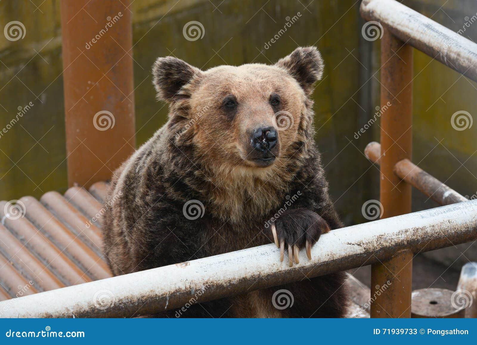 Медведь ждать некоторую еду