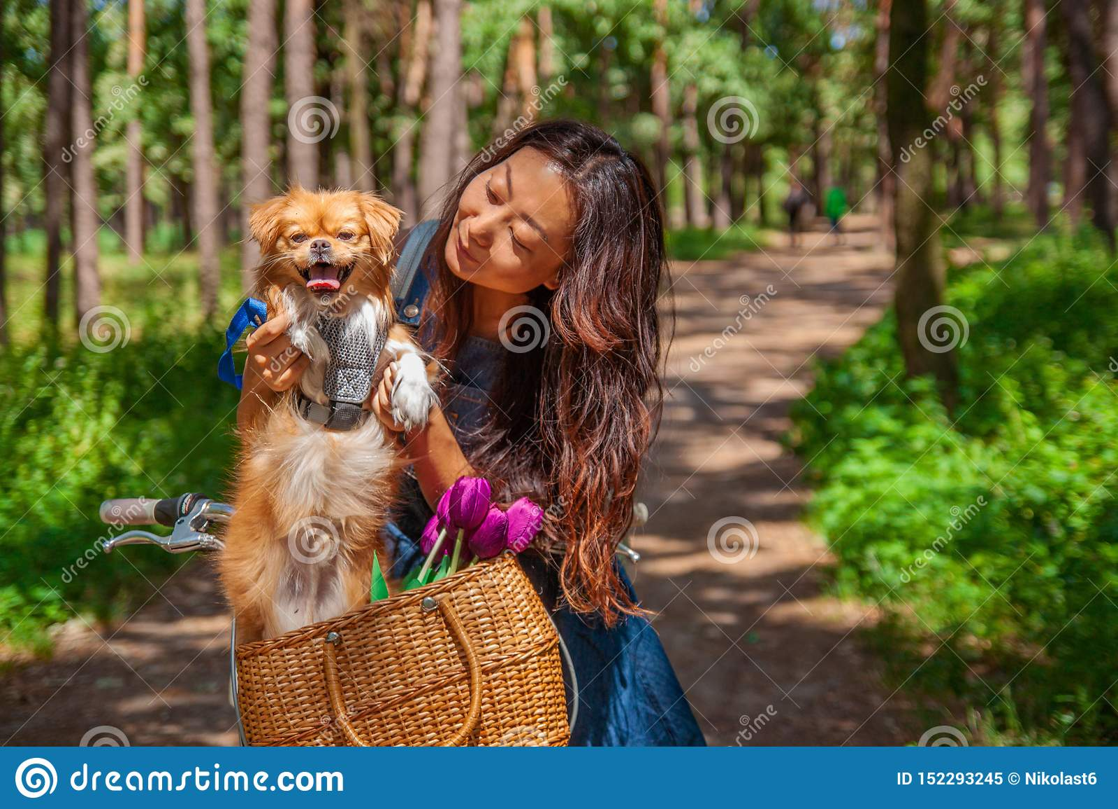 Милая азиатская девушка с меньшей собакой идя в парк Женщина сидя на зеленой траве с собакой - на открытом воздухе в портрете при