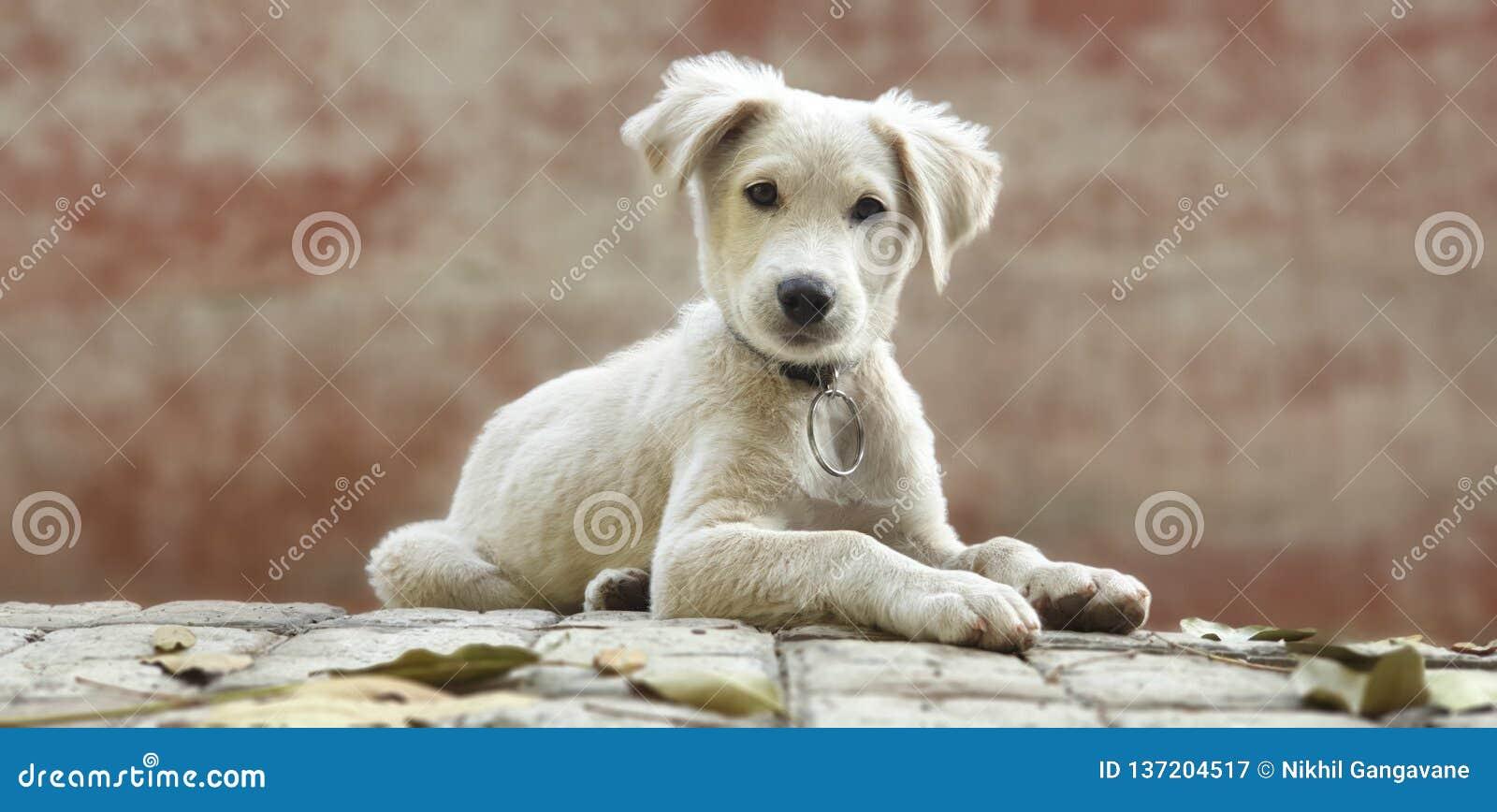 милая белизна щенка