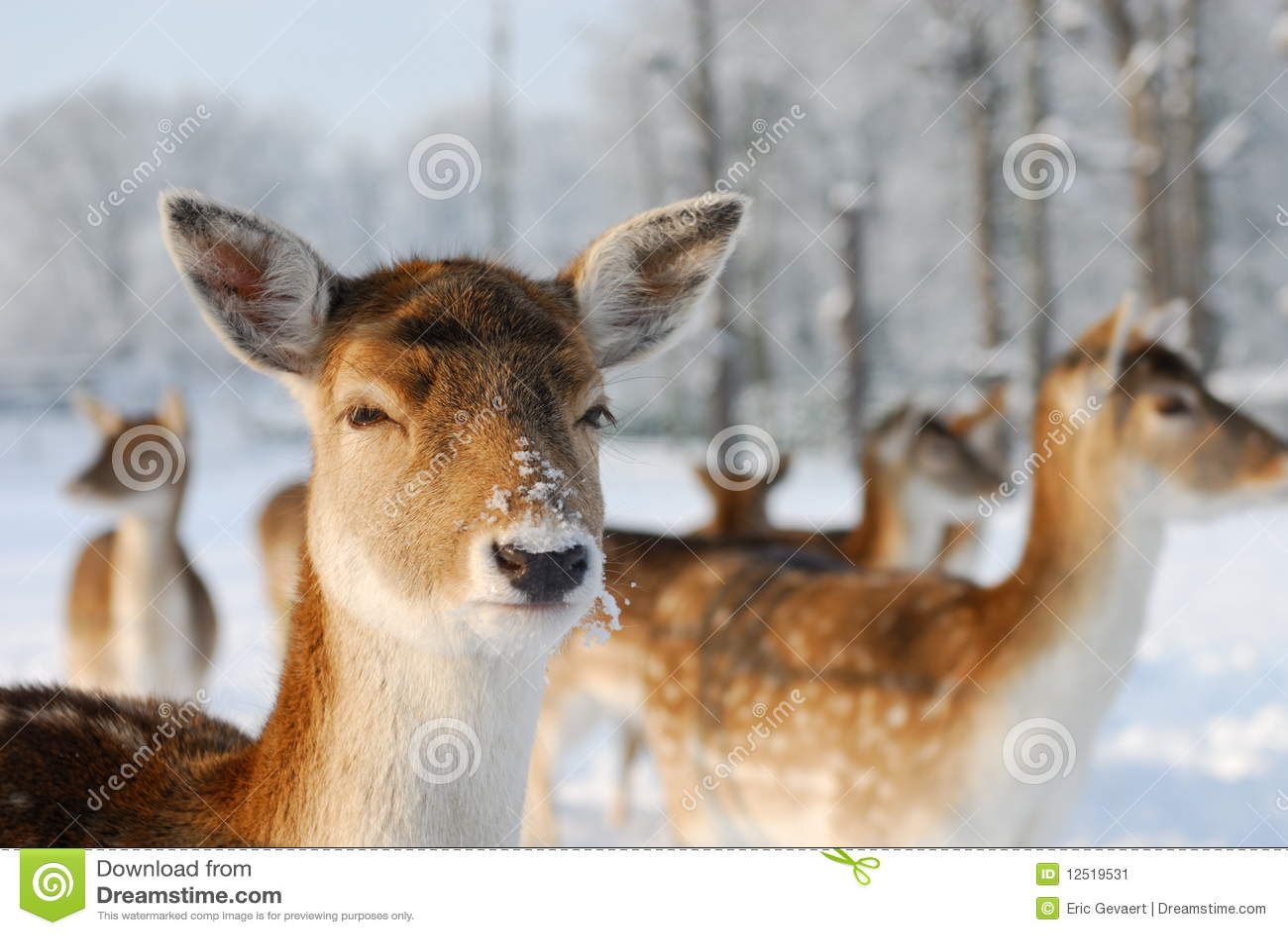 милая зима оленей