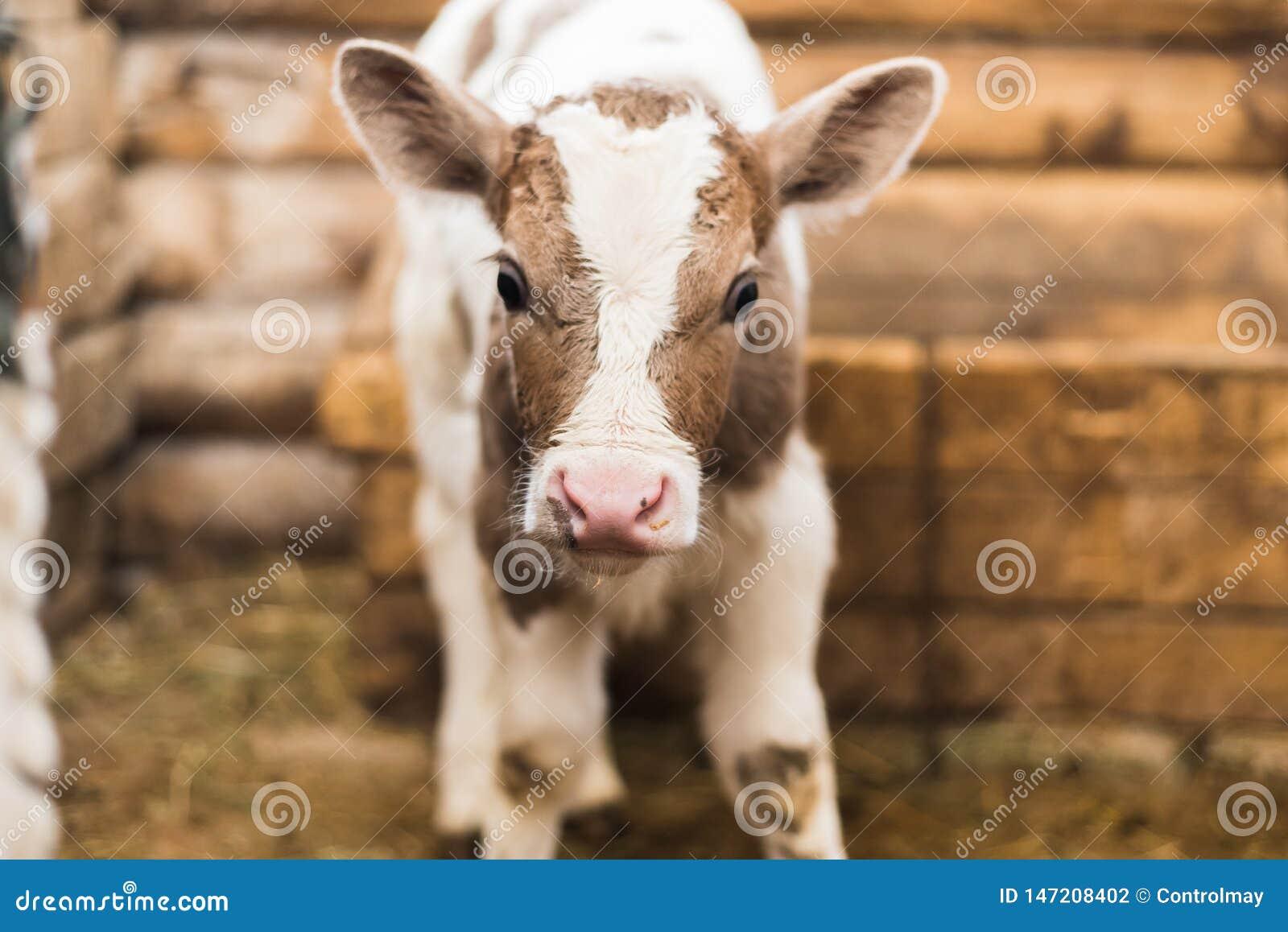 Милая икра на ферме