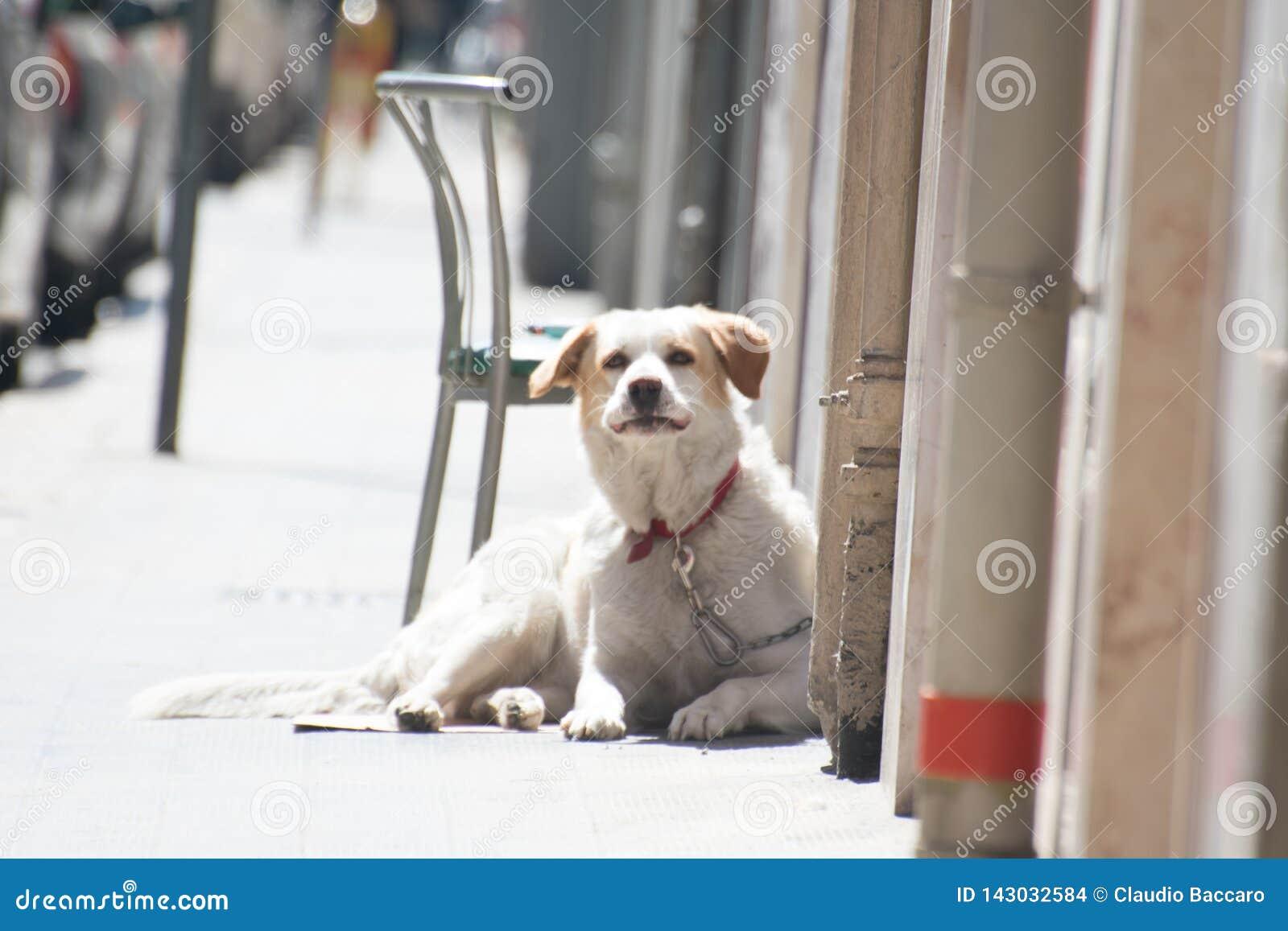 Милая любящая собака кладя на том основании ища любовь и привязанность