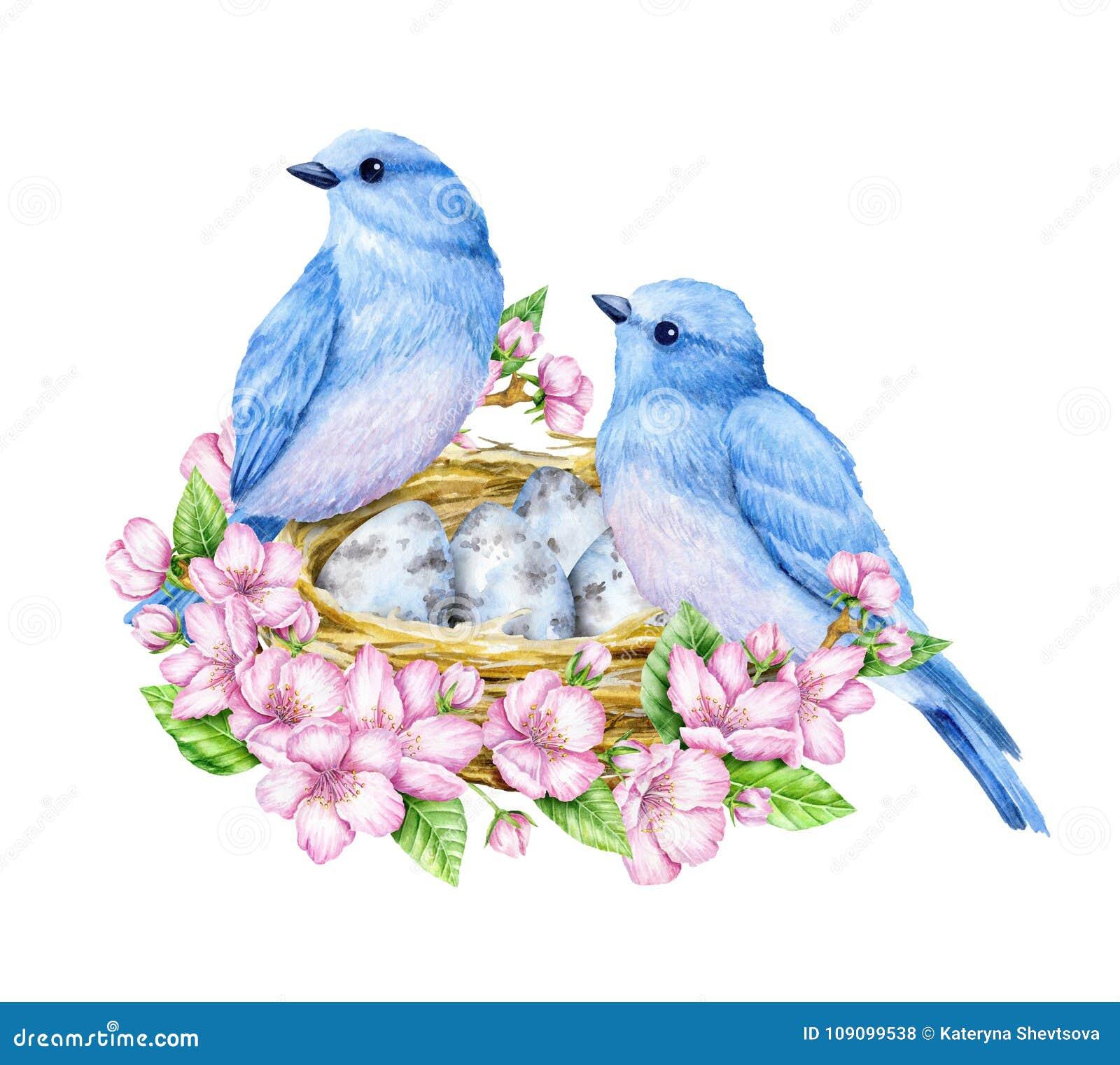 перо птицы по английски