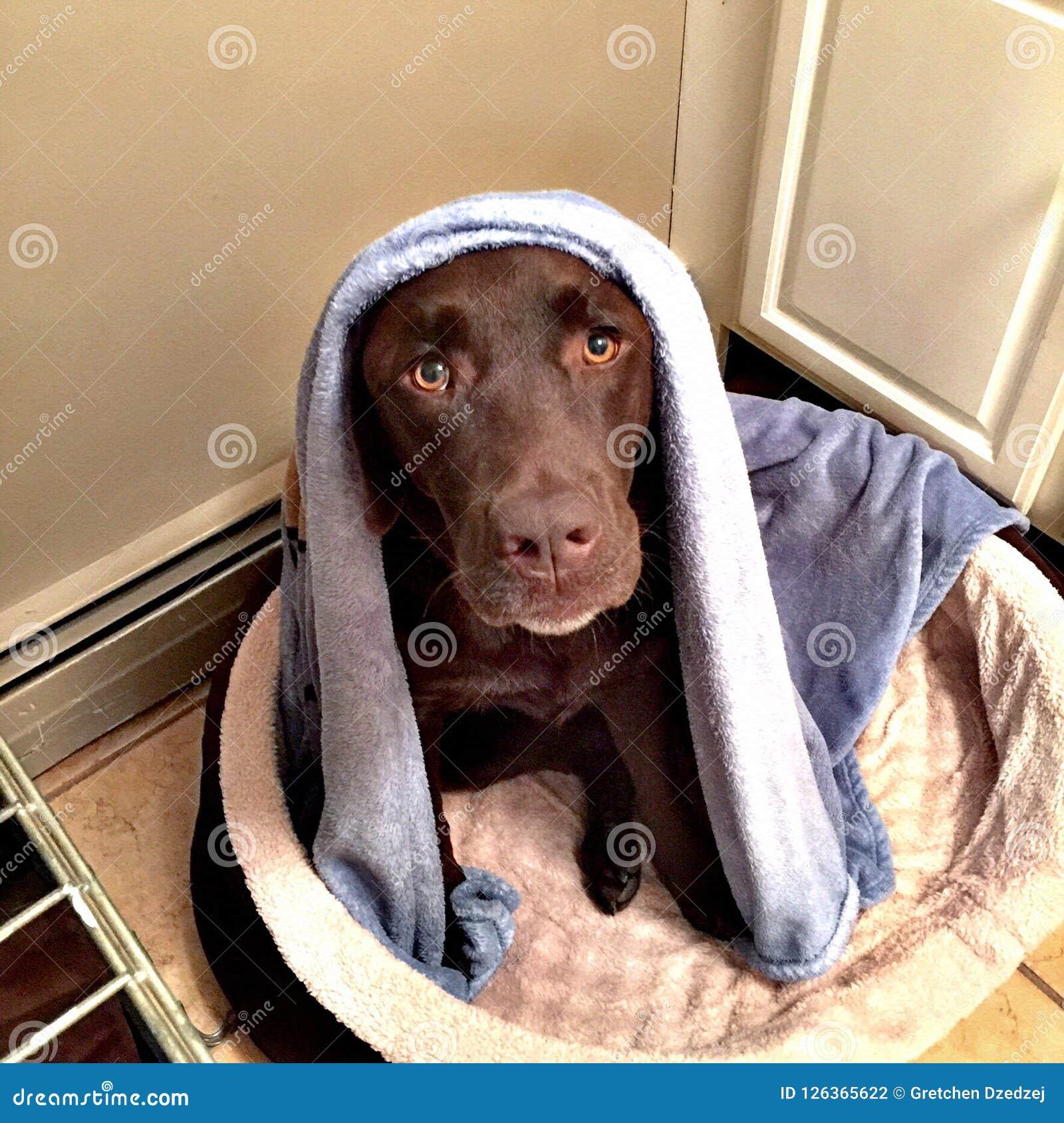 Милое время ванны собаки