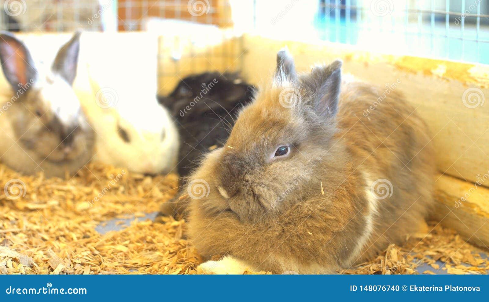 Милые кролики зайчиков на зоопарке, пушистые зайчики
