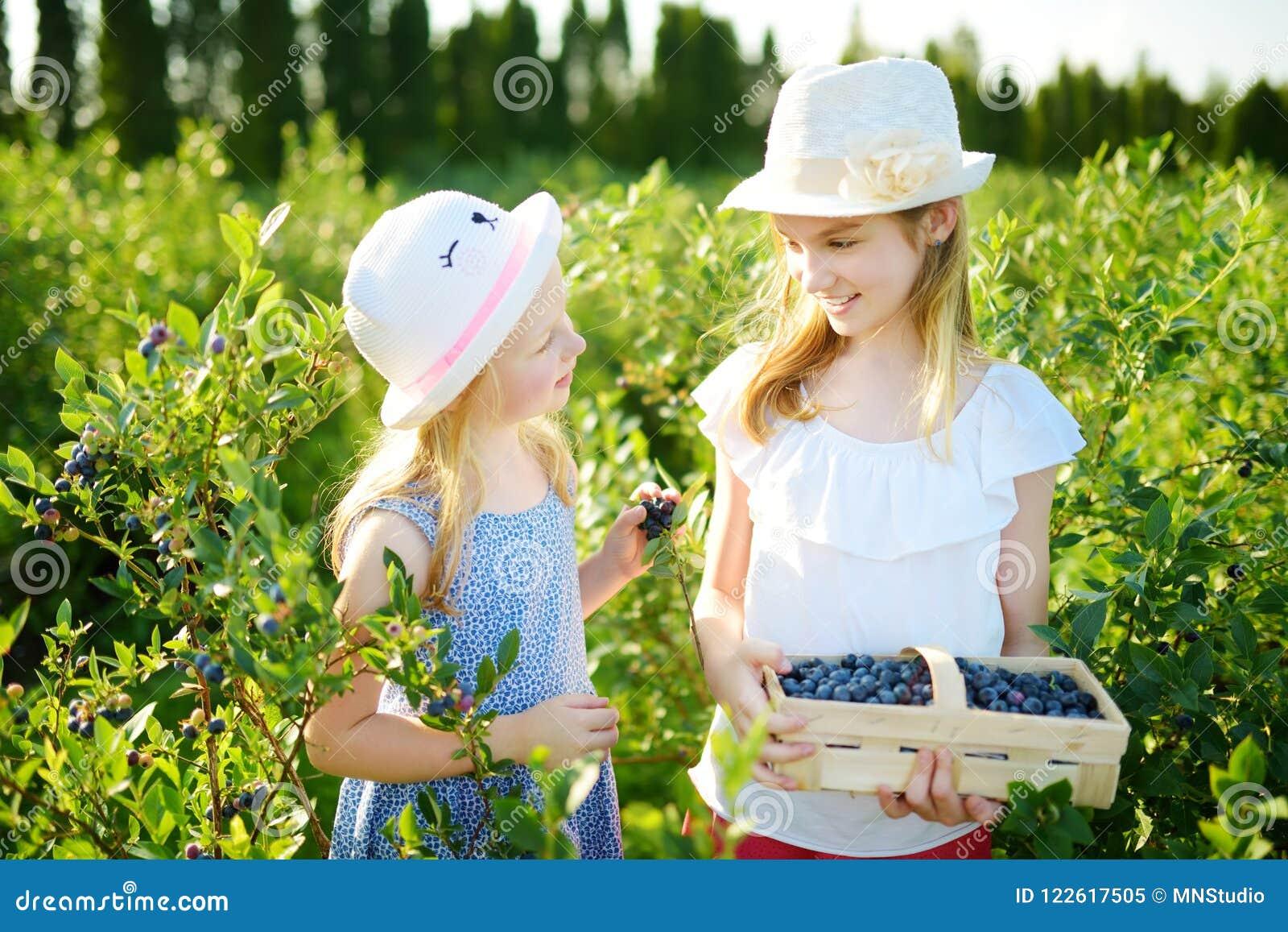 Милые маленькие сестры выбирая свежие ягоды на органической ферме голубики на теплый и солнечный летний день Свежие здоровые нату
