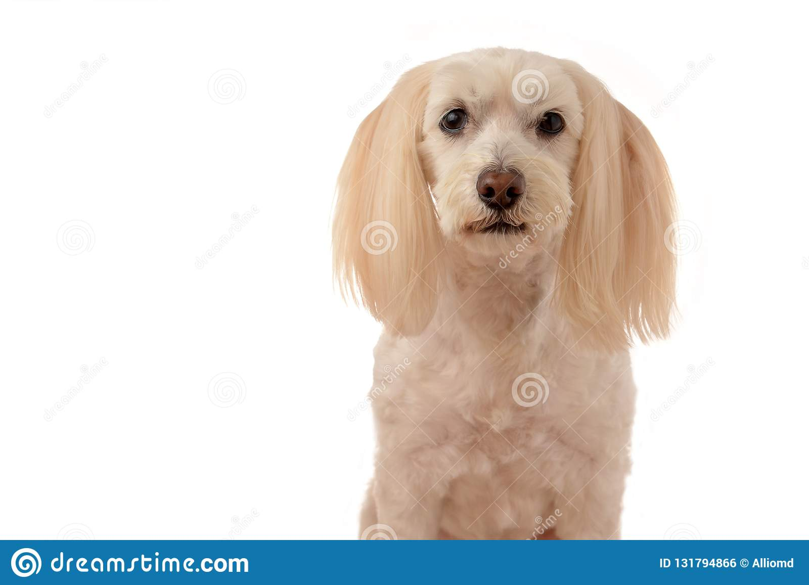 Милый белый щенок на белой предпосылке