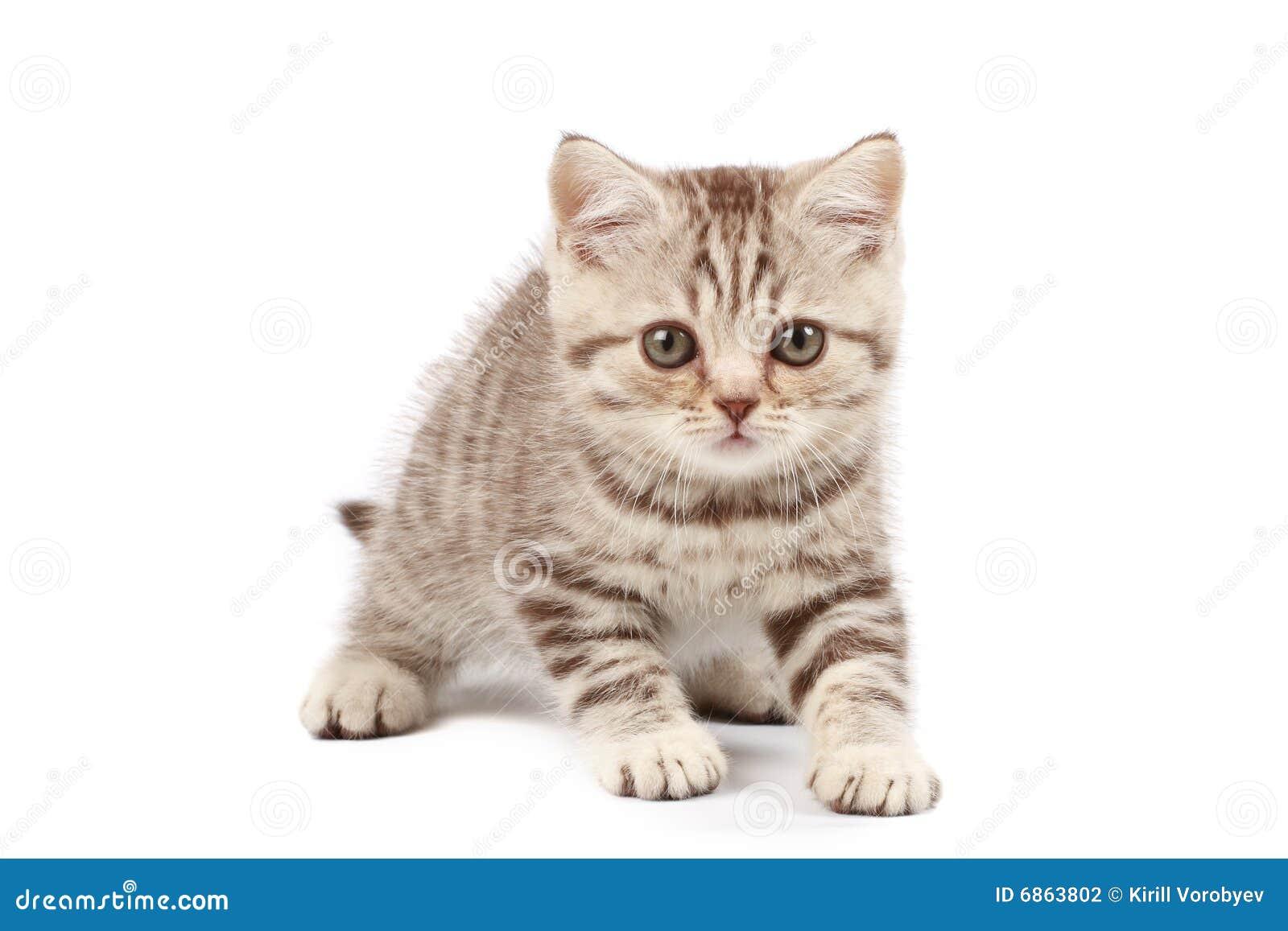 милый котенок немногая