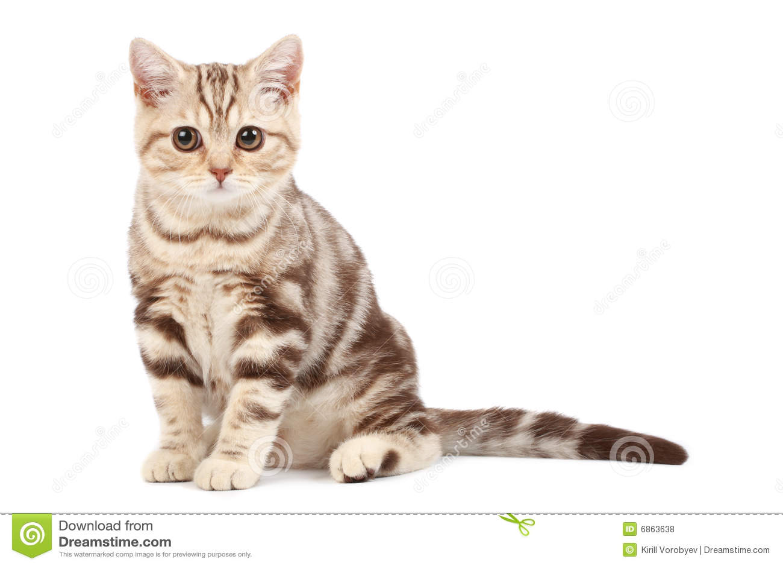 милый котенок