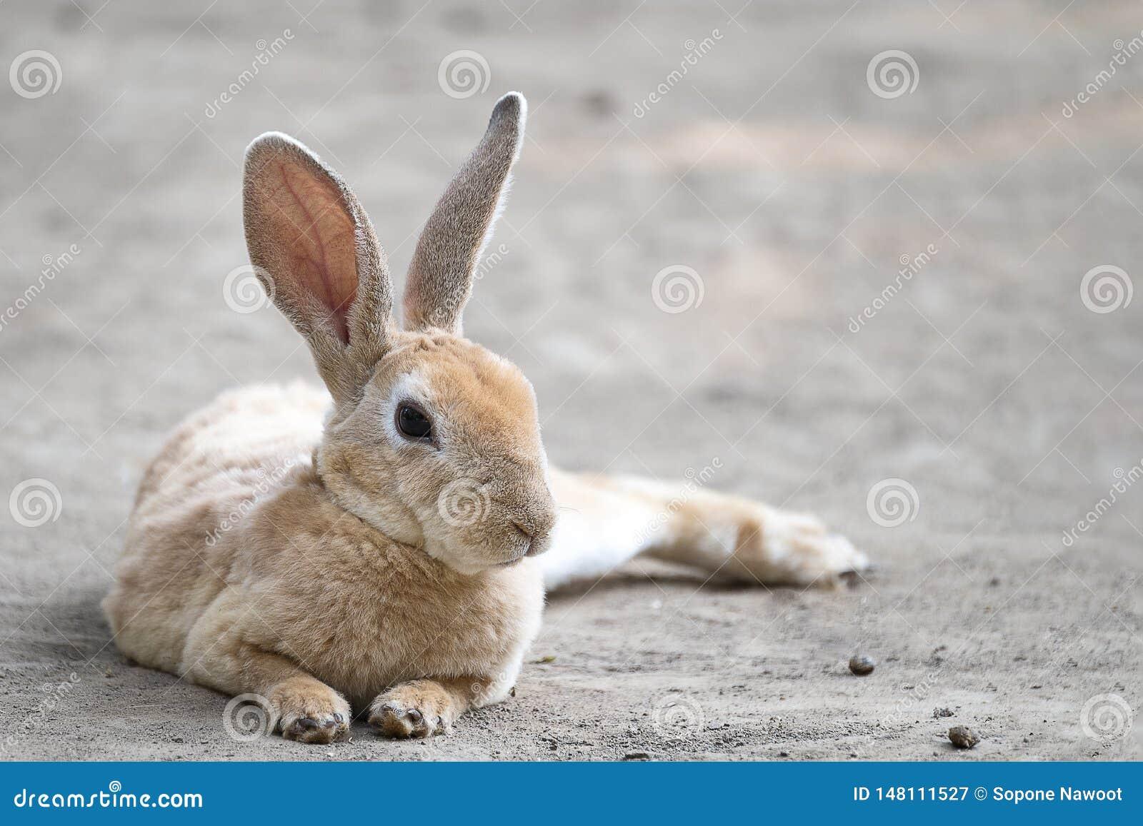 милый меньший кролик