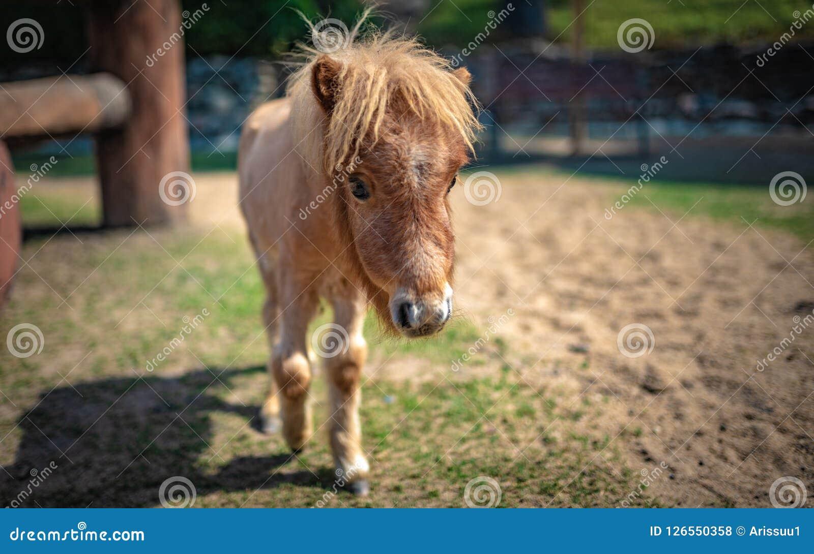 Миниатюрная лошадь в портрете выгона