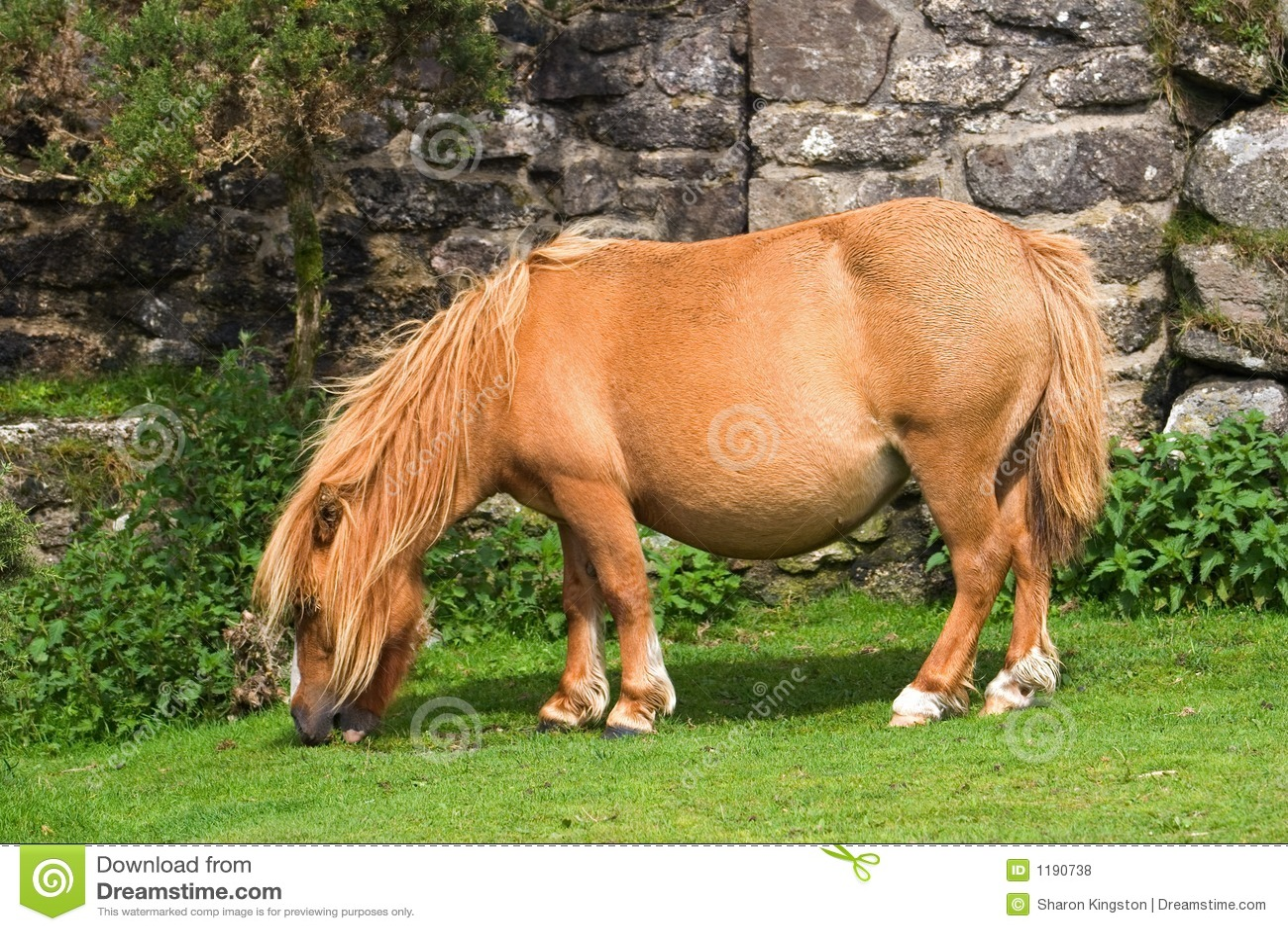 миниатюрный пони