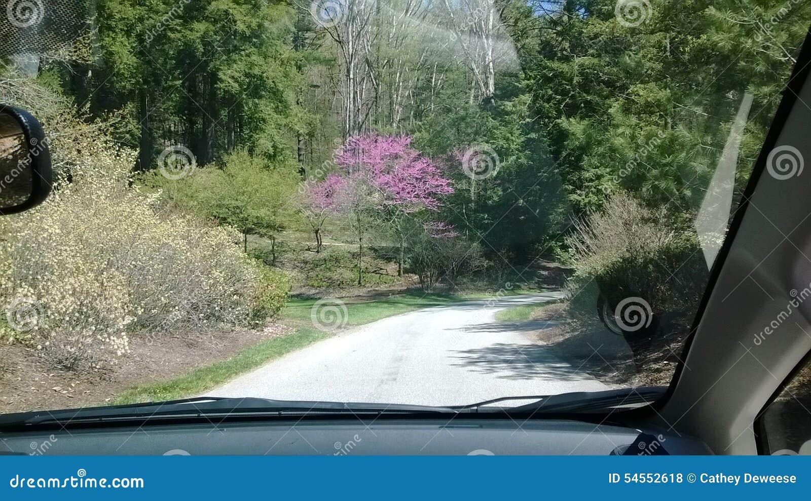 Мирный привод в парке во время весны