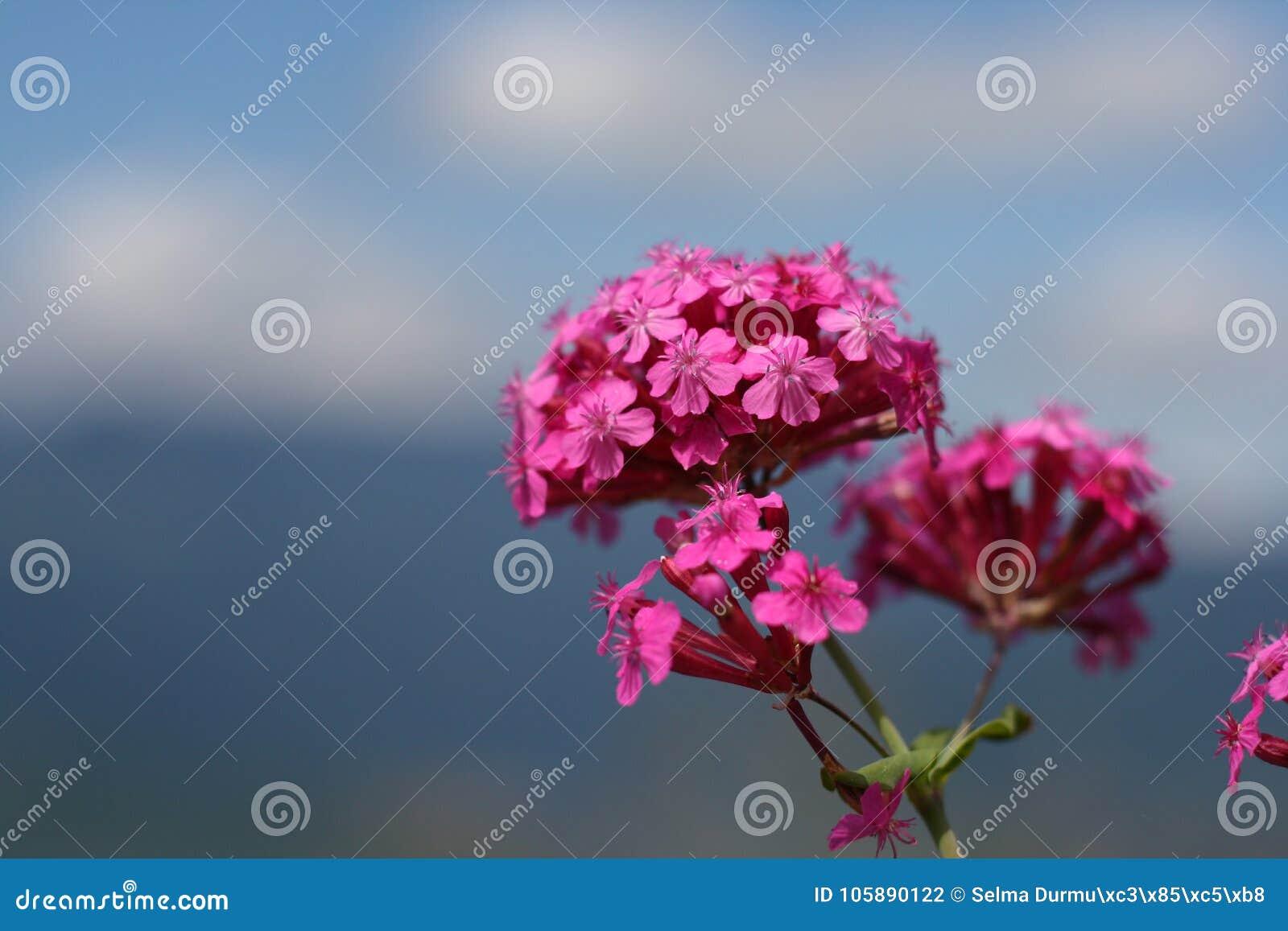 Мирный цветок