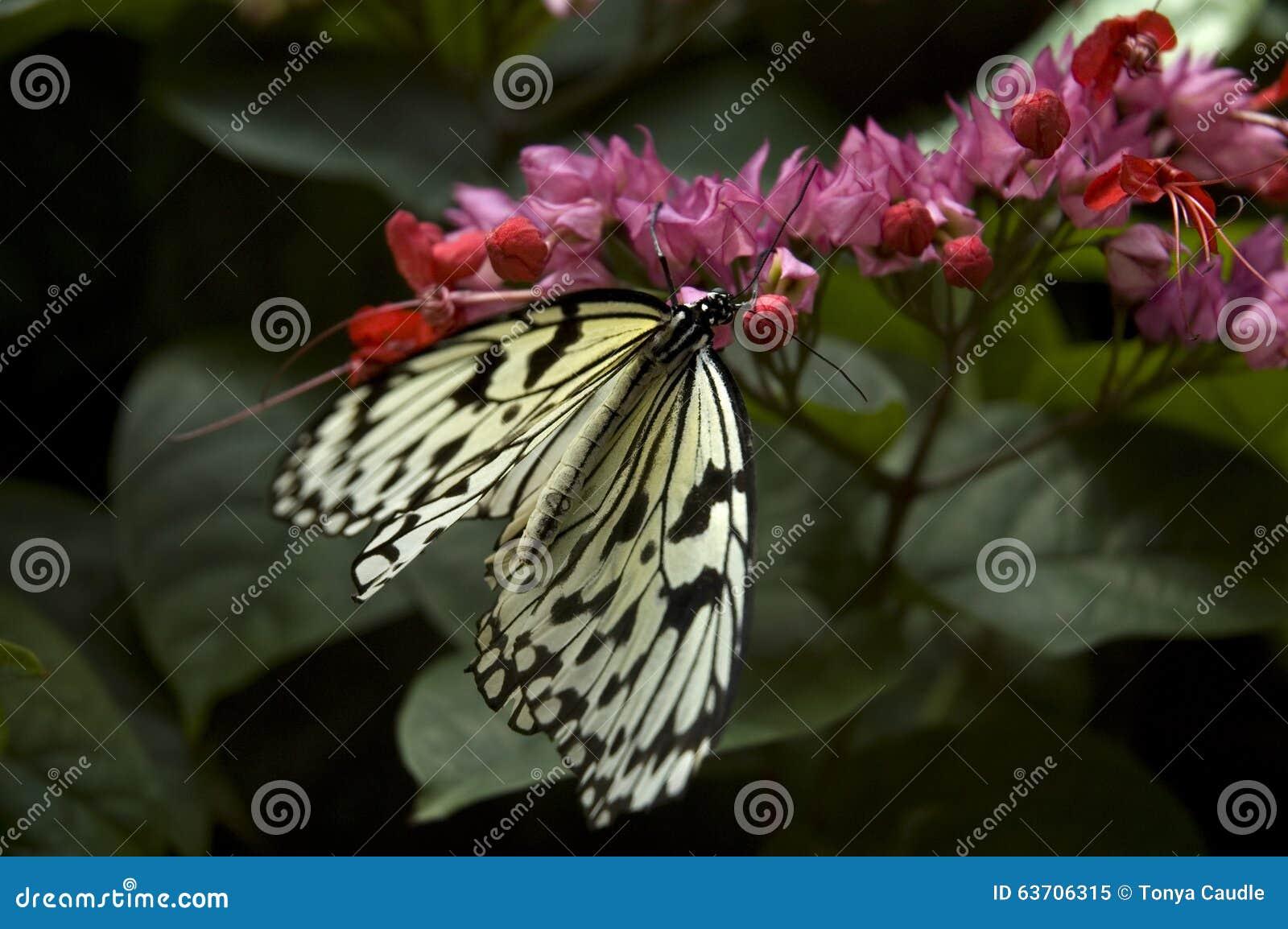 Мир бабочка