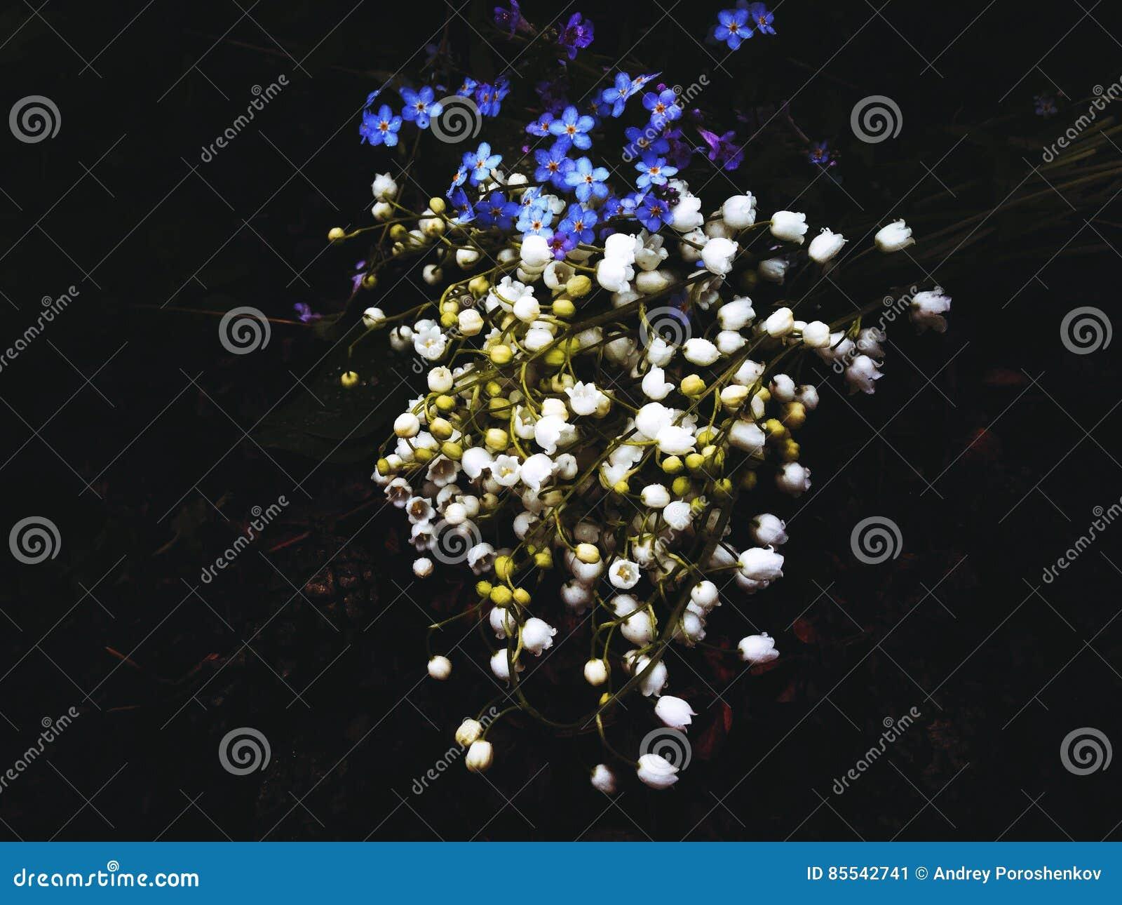 мир глуши долины природы лилии русский