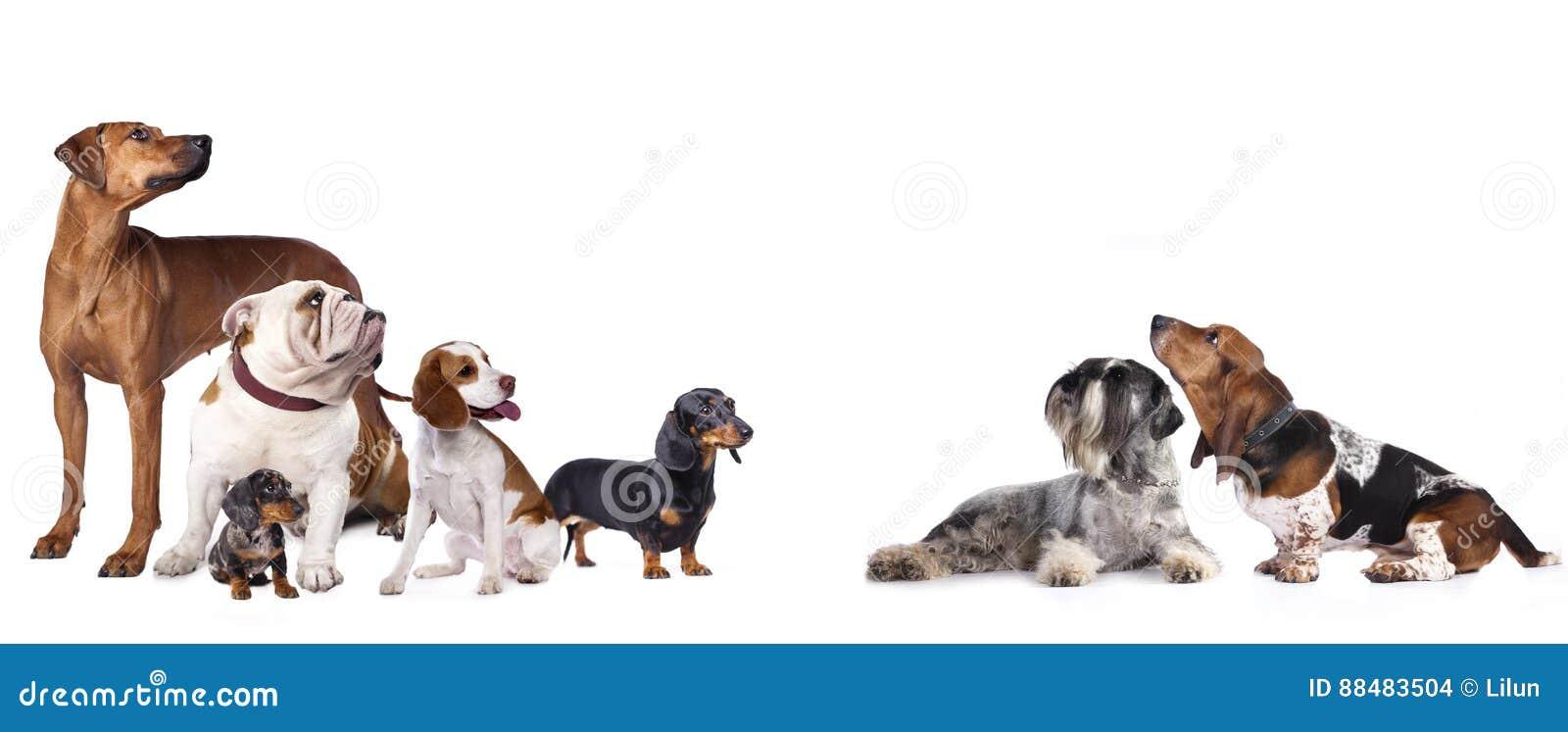мир глуши природы группы собак русский