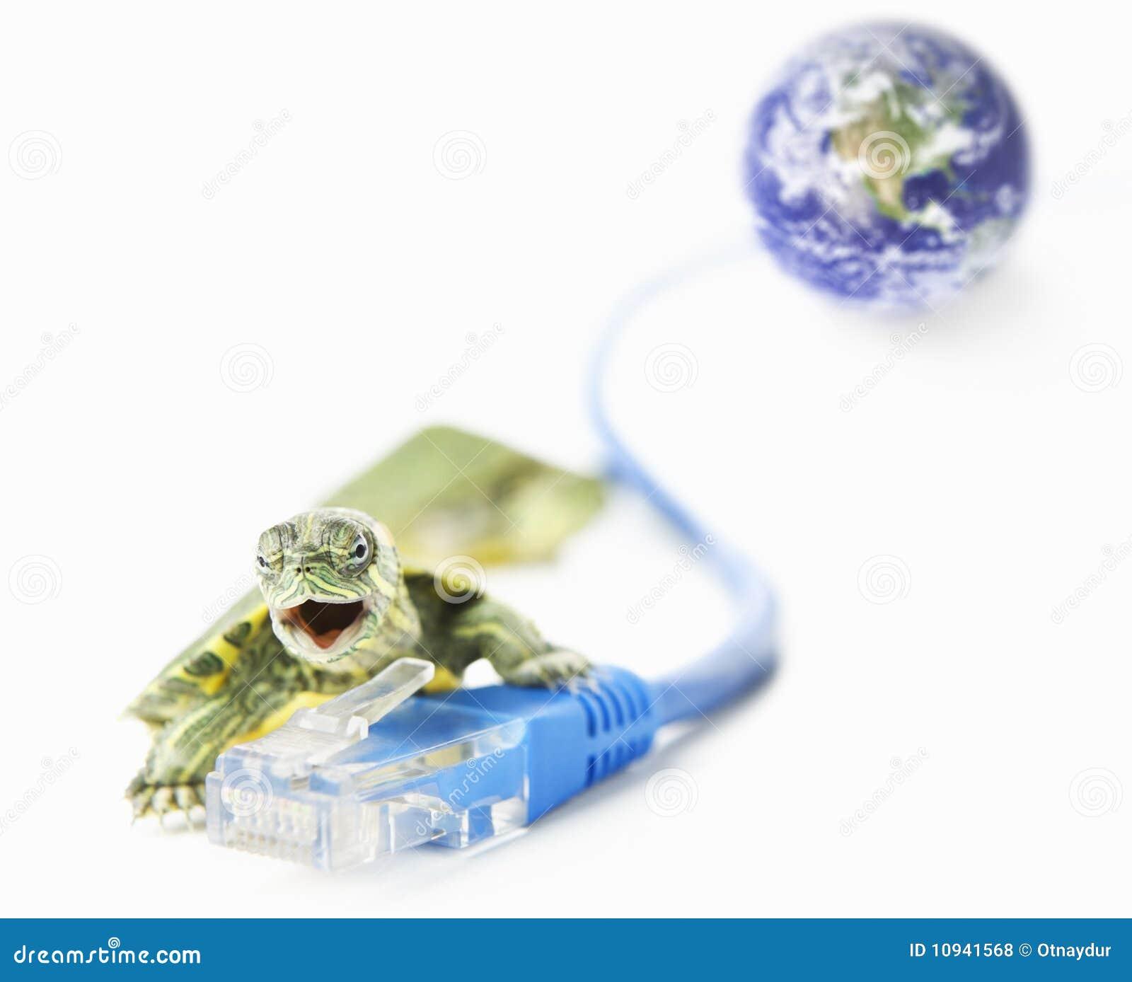 мир черепахи lan глобуса кабеля