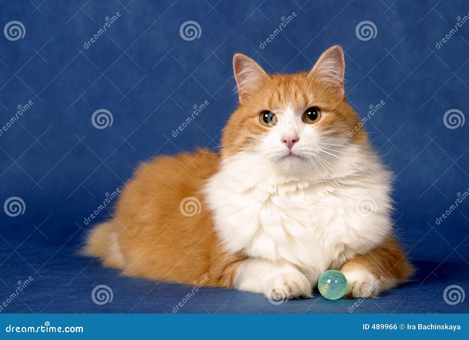 мистик кота