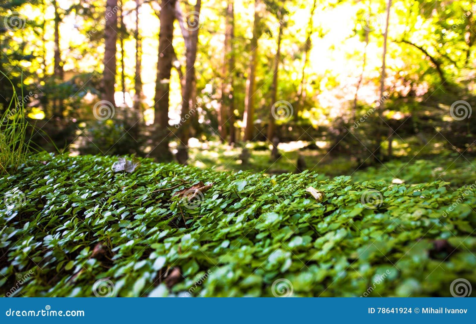 Мистический заколдованный лес