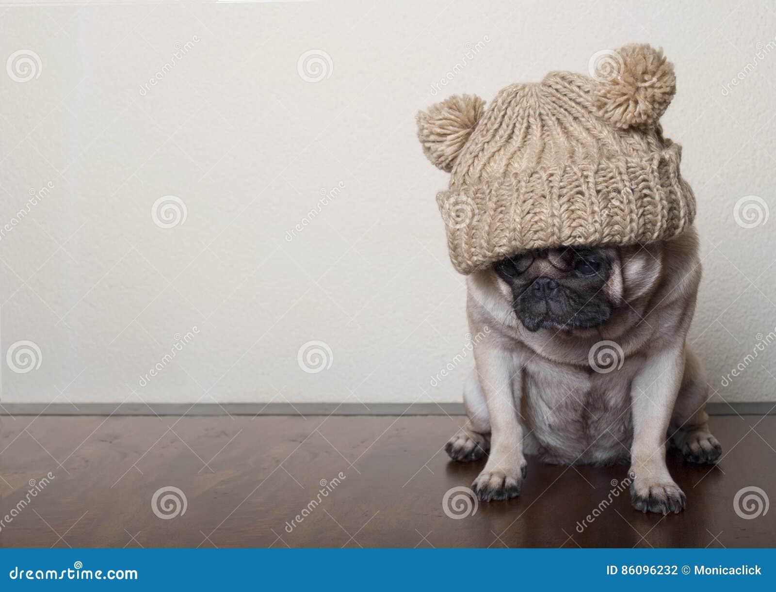 Милая маленькая жалостливая унылая собака щенка мопса, сидя вниз на деревянном поле