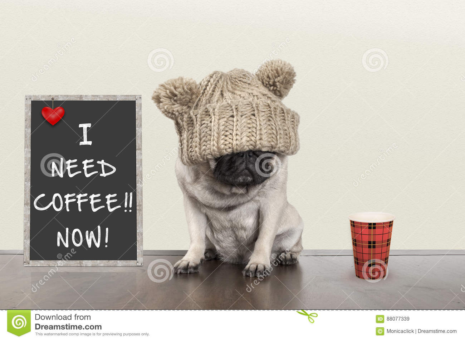 Милая маленькая собака щенка мопса при плохое настроение утра, сидя рядом с знаком классн классного с текстом мне нужен кофе тепе
