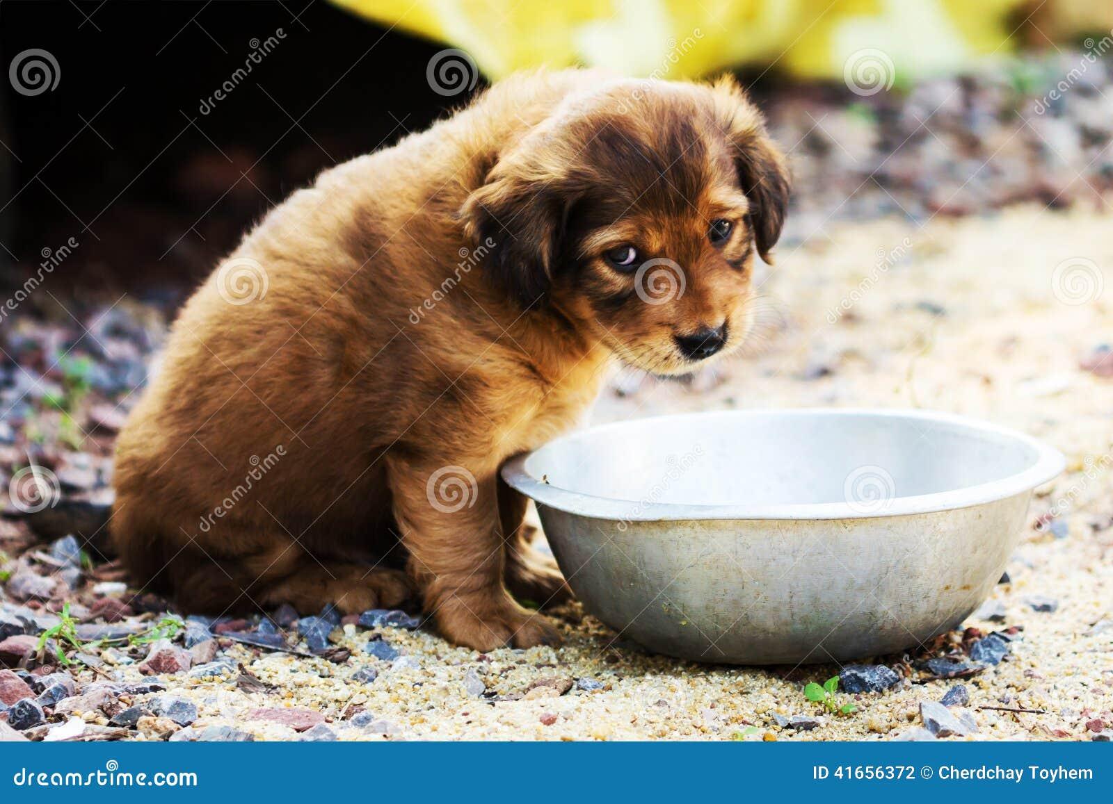Милый застенчивый щенок