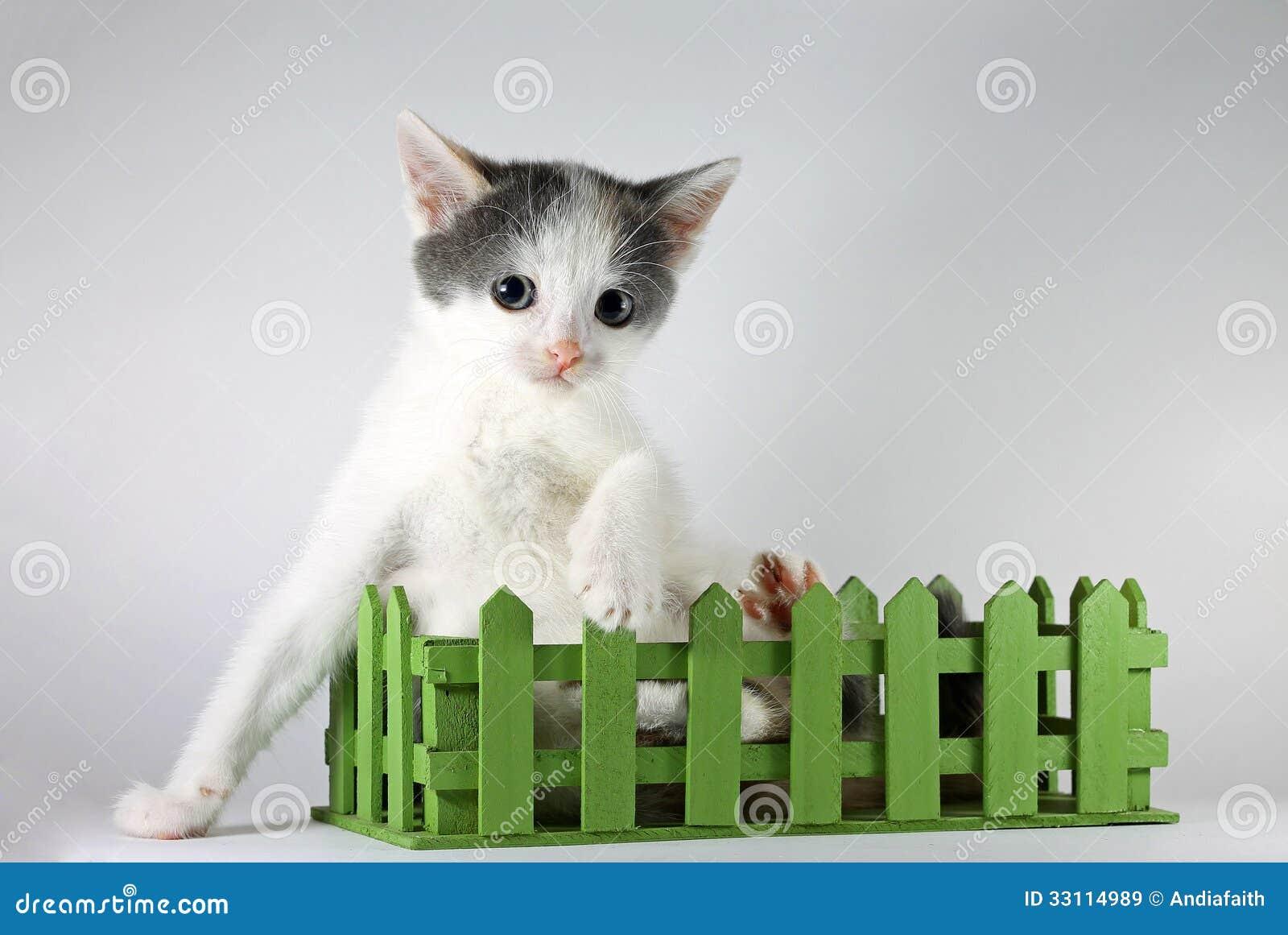 Милый котенок представляя в зеленой деревянной коробке ...