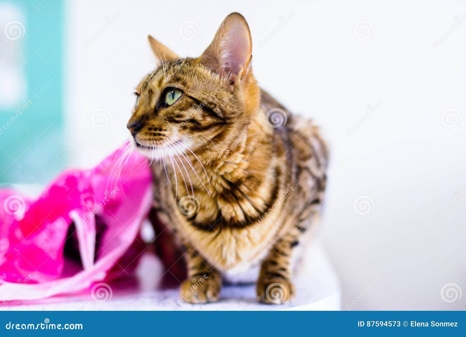 Кот милый красивый
