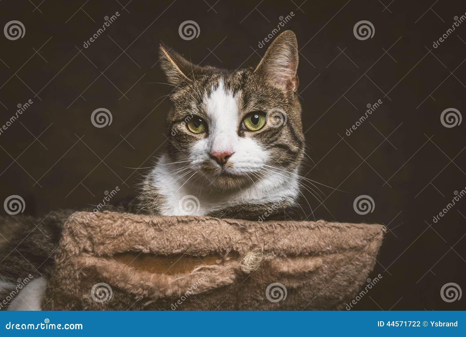 Милый молодой кот tabby при белый комод лежа на царапать столб против темной предпосылки ткани