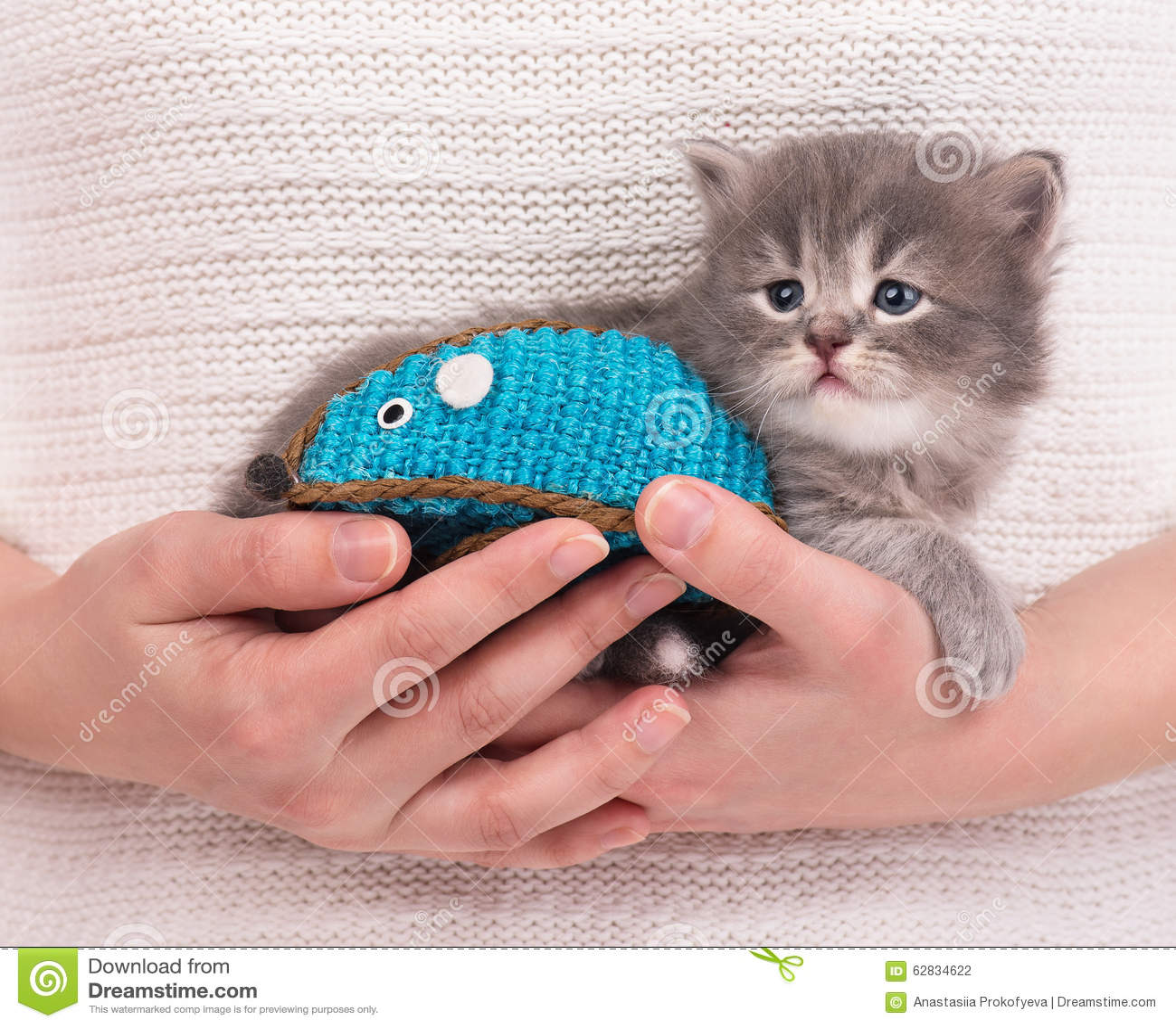 Милый сибирский котенок