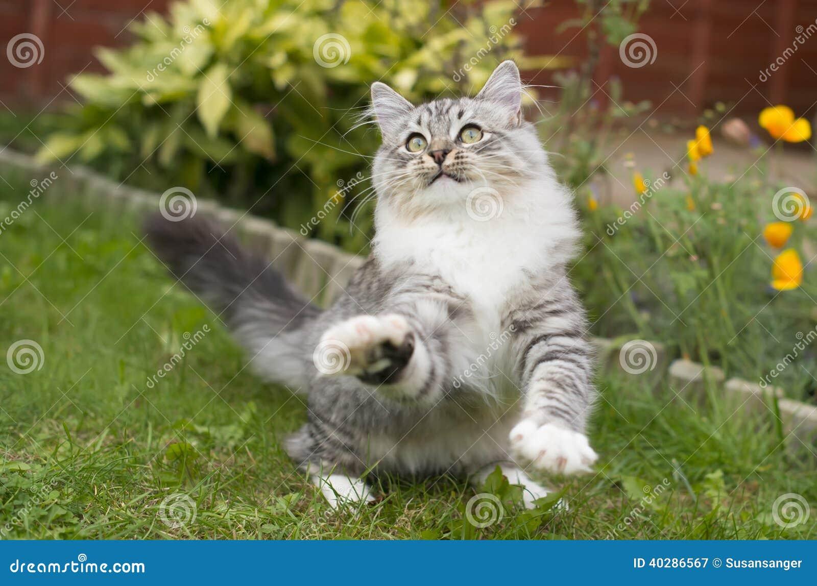 Милый шаловливый котенок