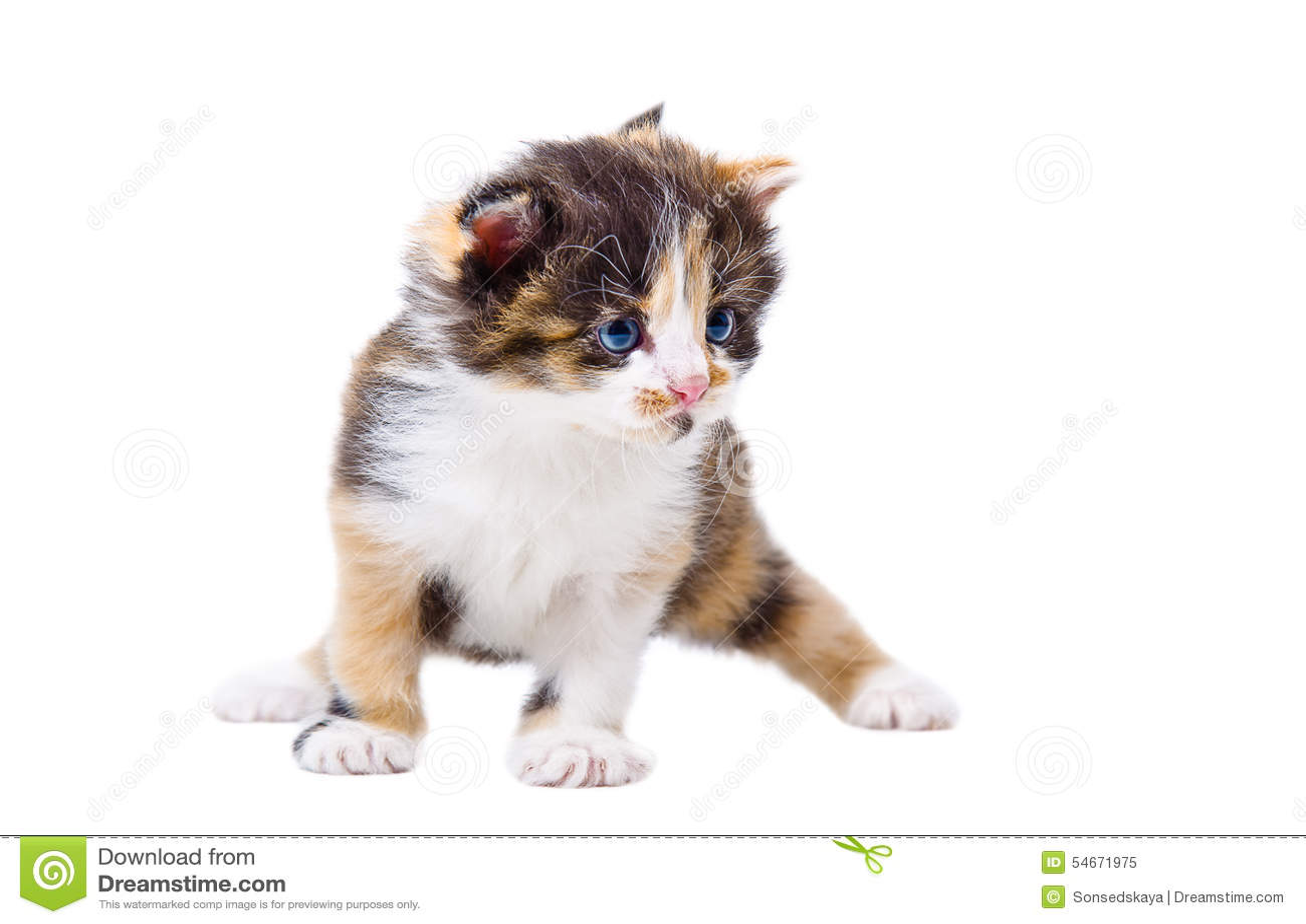 Милый tricolor котенок