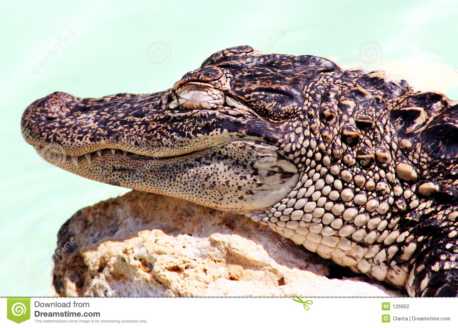 младенец аллигатора