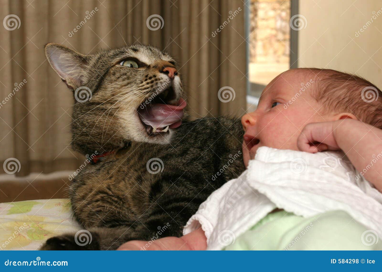 младенец наблюдаемым котом