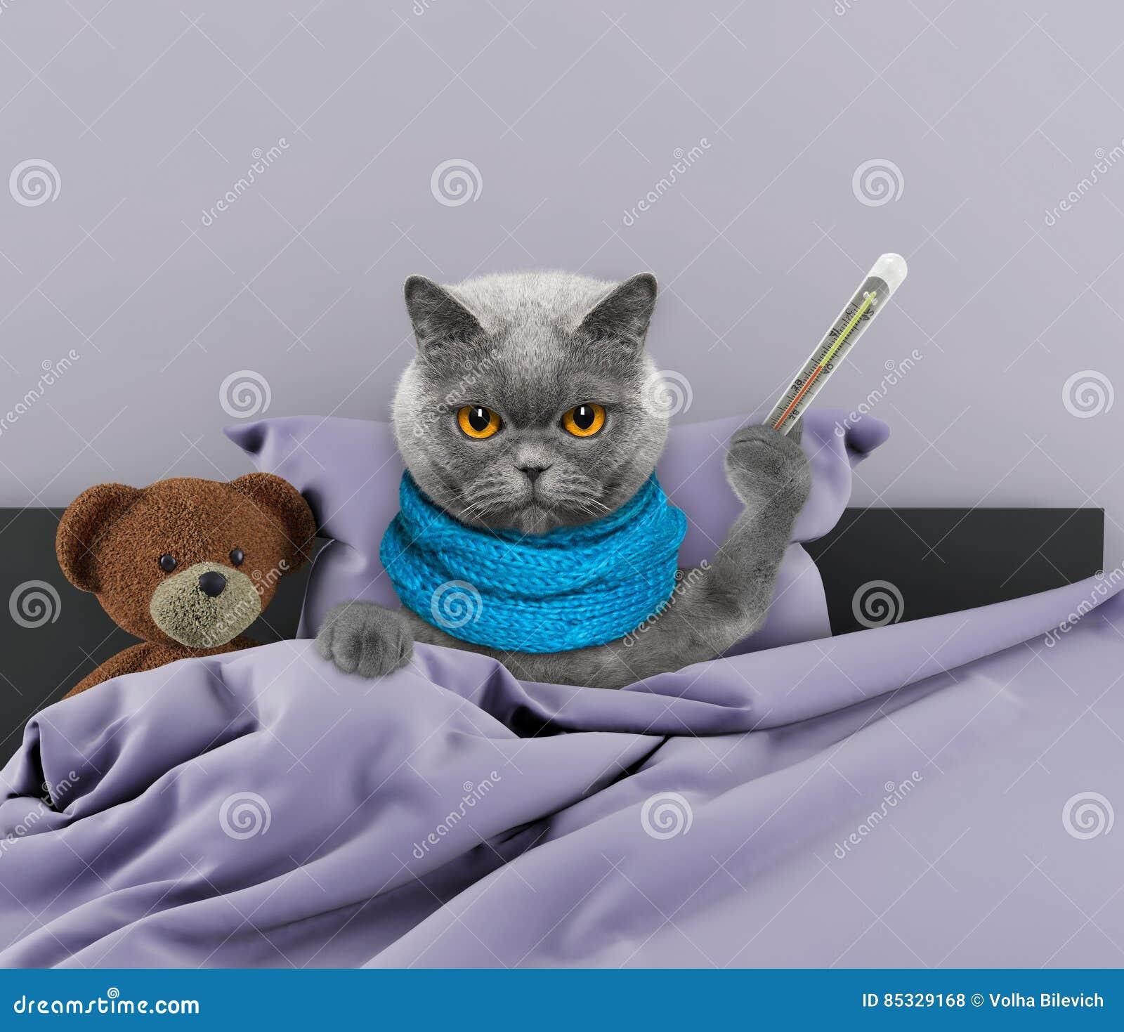 Фото больного кота