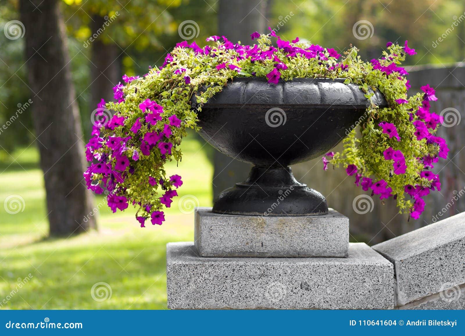 Много красивых растущих цветков и зацветать в большом каменном баке в парке на день лета солнечный Предпосылка зеленой травы и де