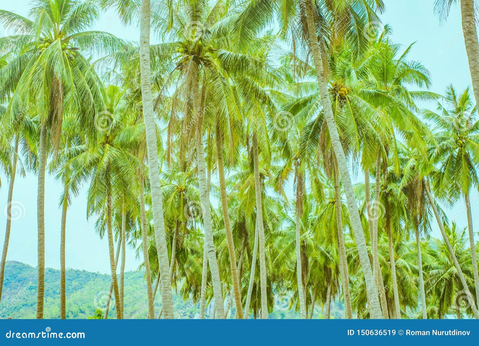 Много пальм в строках