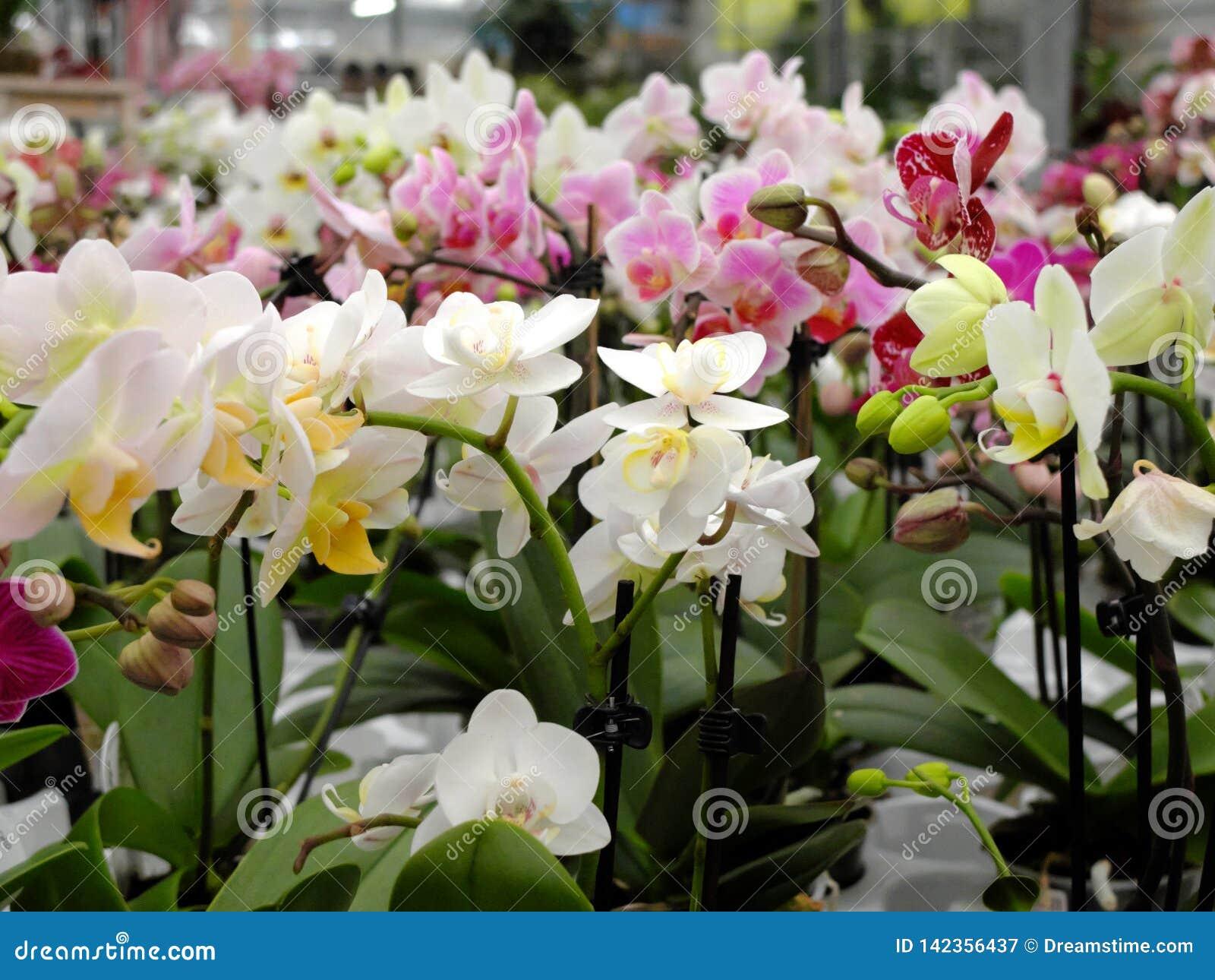 Много цветков орхидеи других цветов в цветочном магазине для продажи
