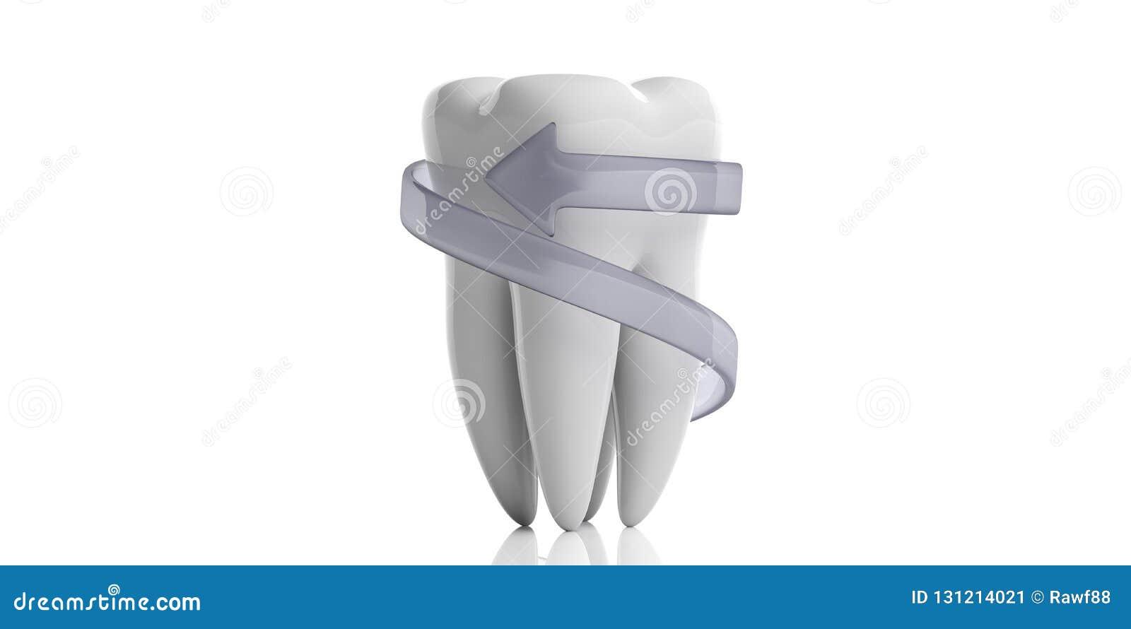 Модель зуба и защитная стрелка изолированные на белой предпосылке иллюстрация 3d