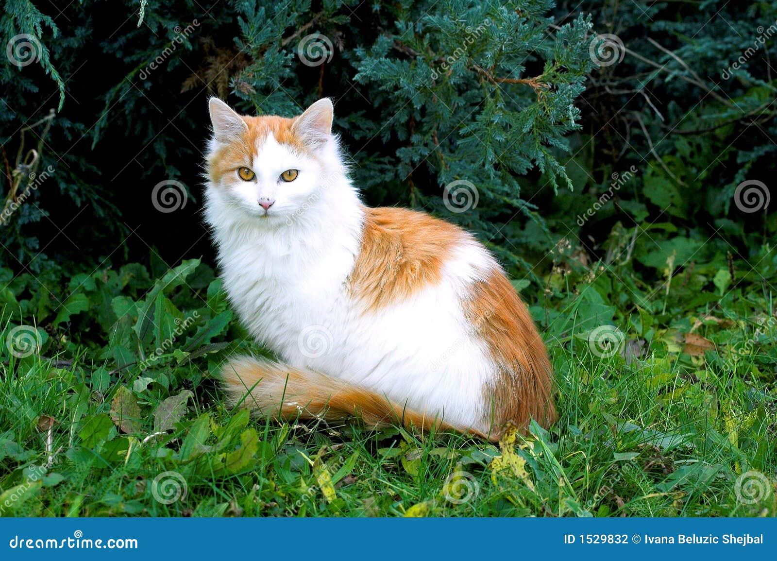 модель кота