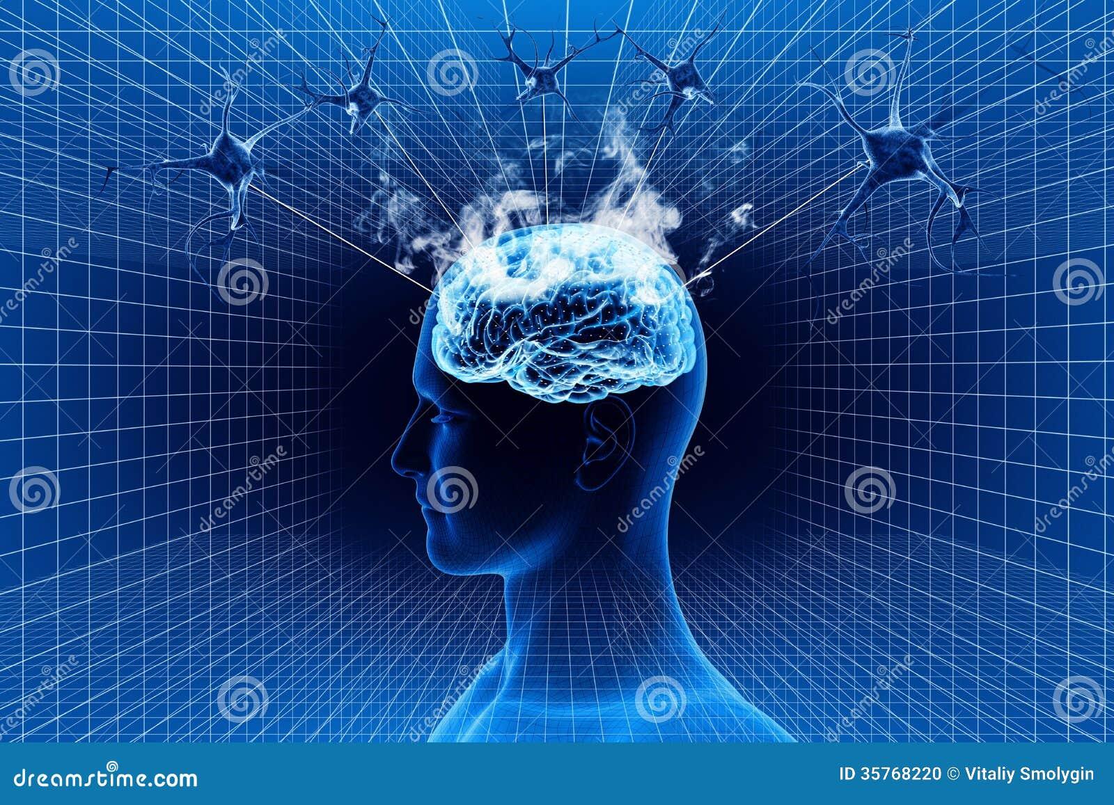 Мозг и нейрон