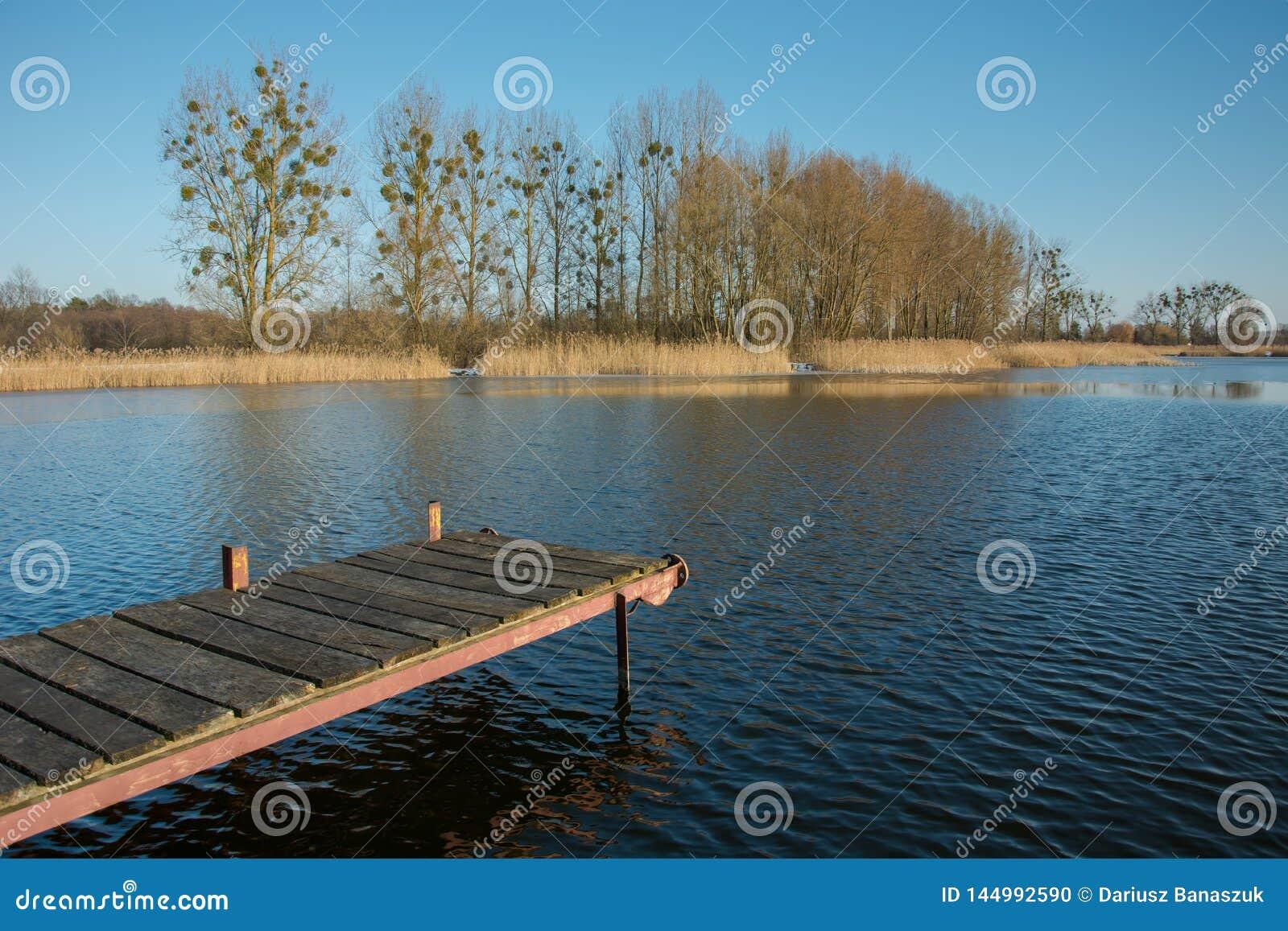 Мола с планками на спокойном озере Деревья и тростники на береге и ясн