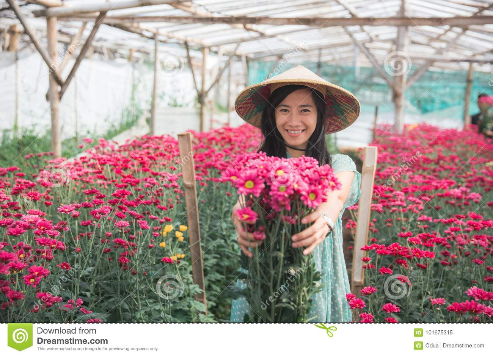 Молодая азиатская женщина показывая цветки стоцвета